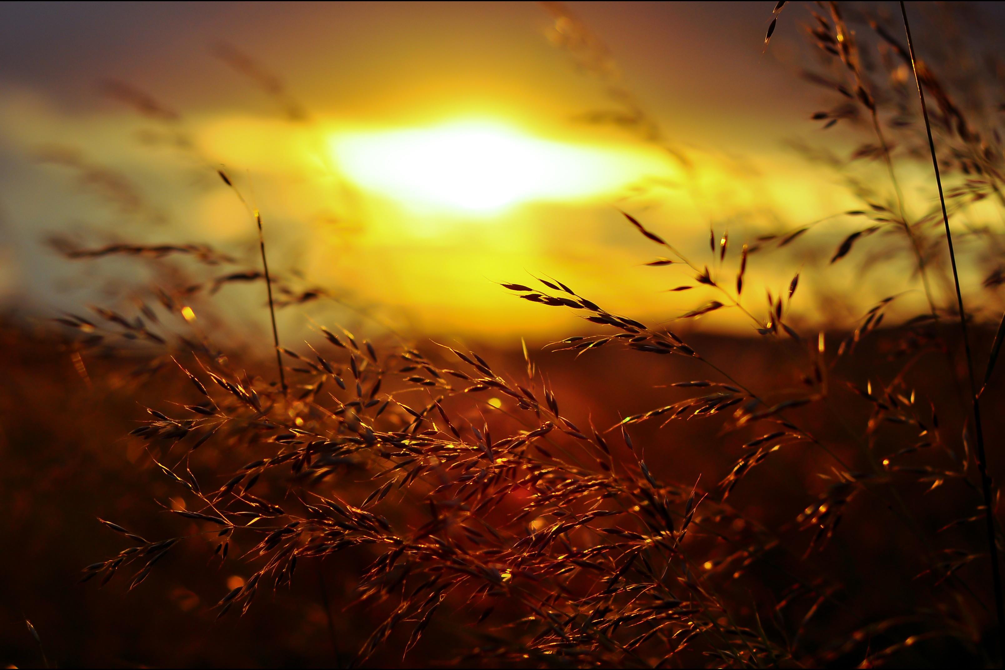 картинка золотой рассвет любят