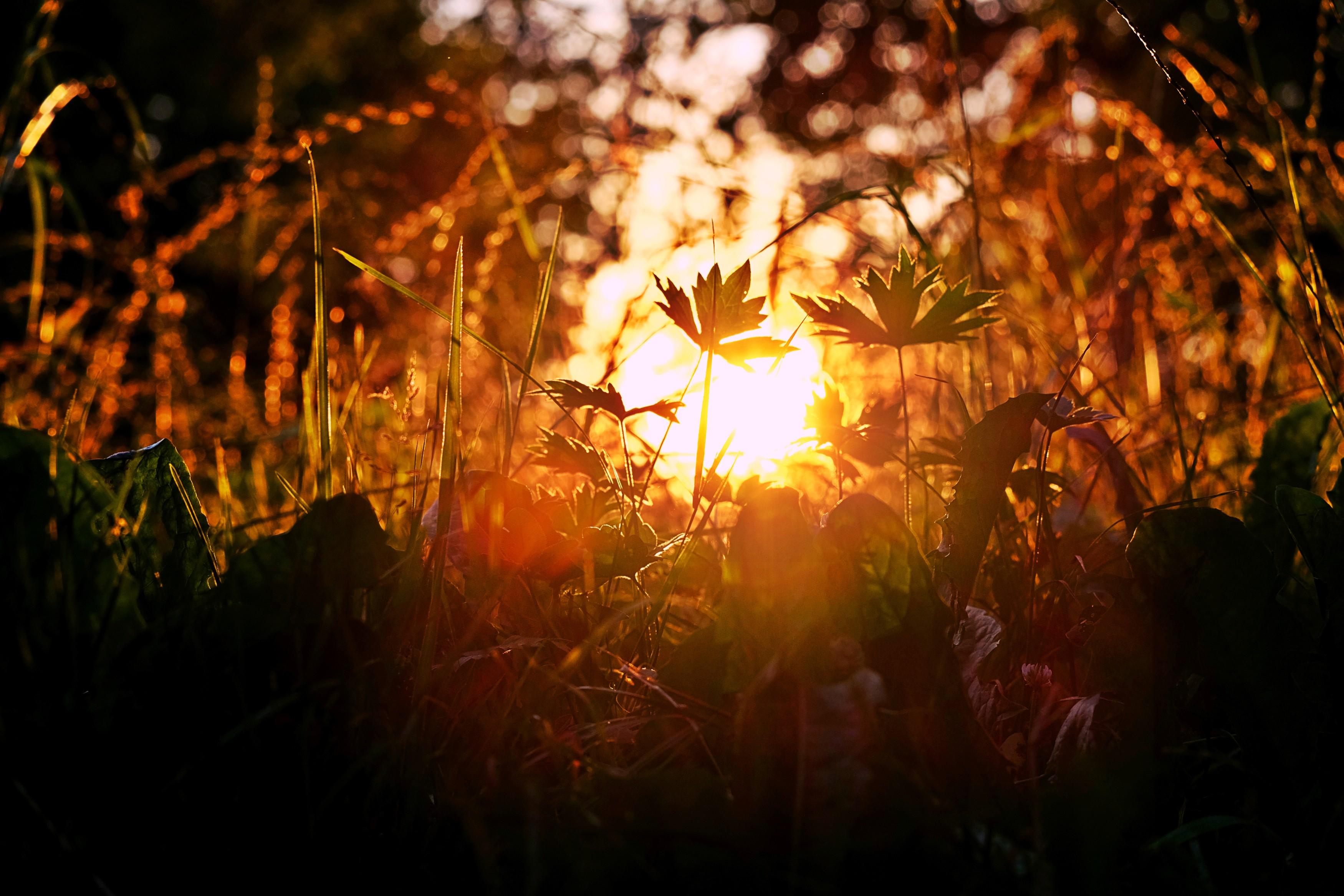 лучи солнца на траве картинки определитесь материалом