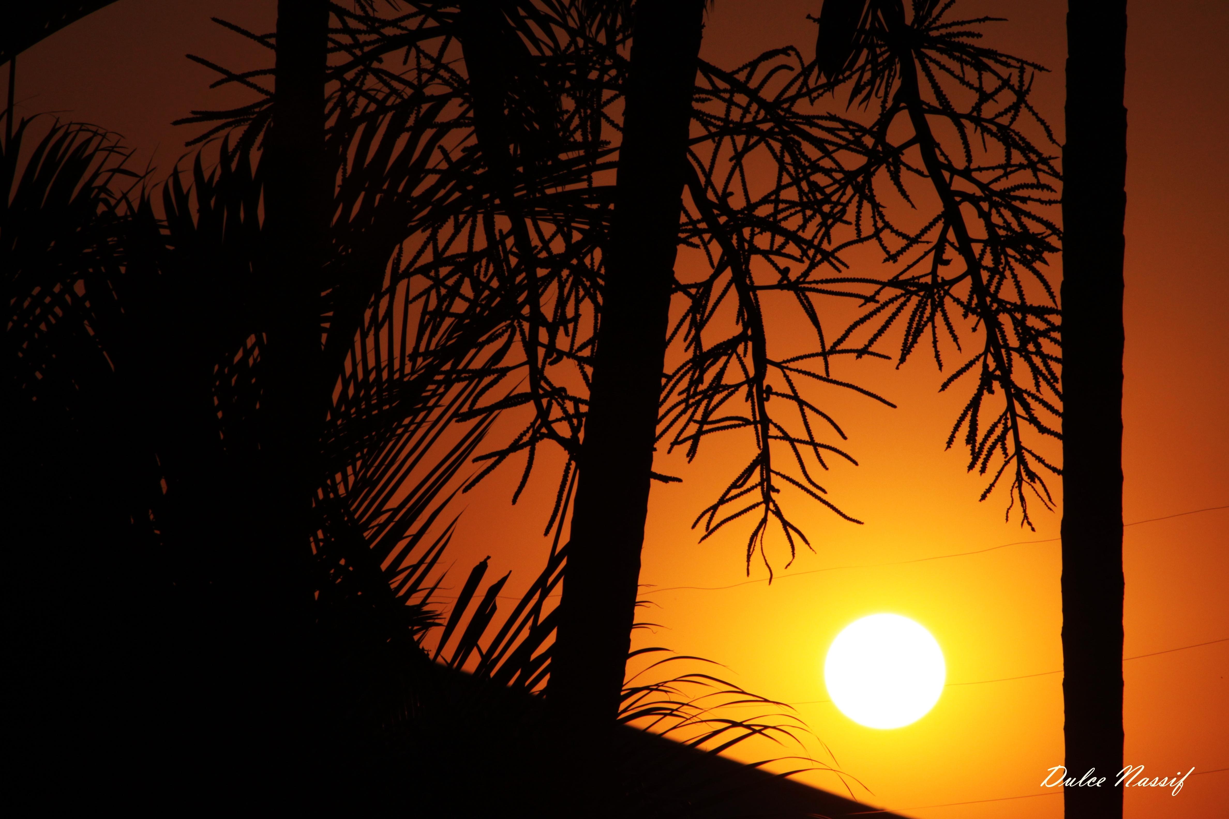 Wallpaper Sunlight Sunset Night Sky Silhouette Branch