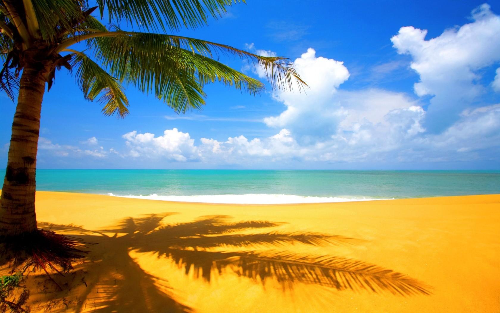 Открытки с пальмами на берегу моря, волгой открытка поздравлениями