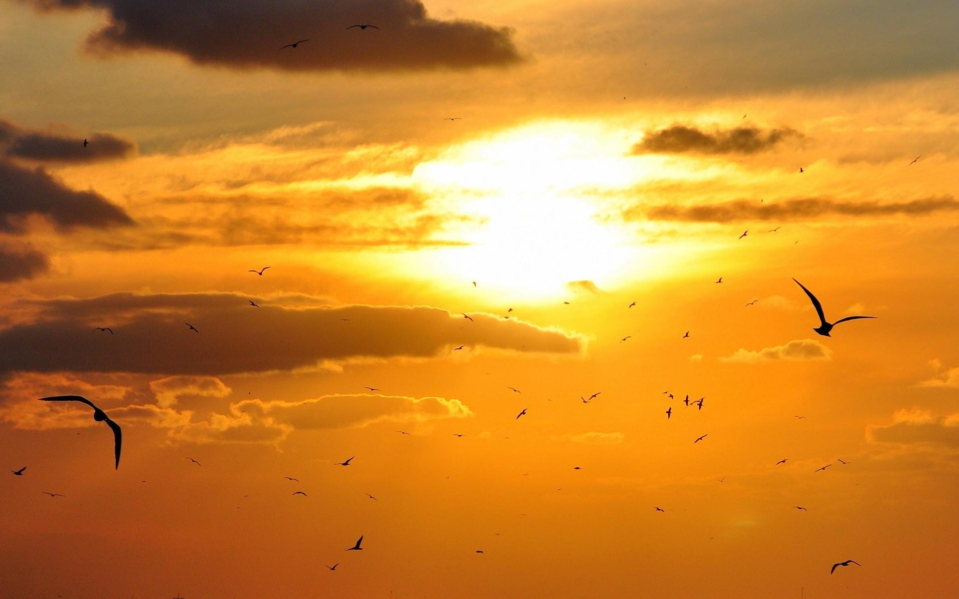 красивое фото облака птицы закат рассвет разделяя мячик