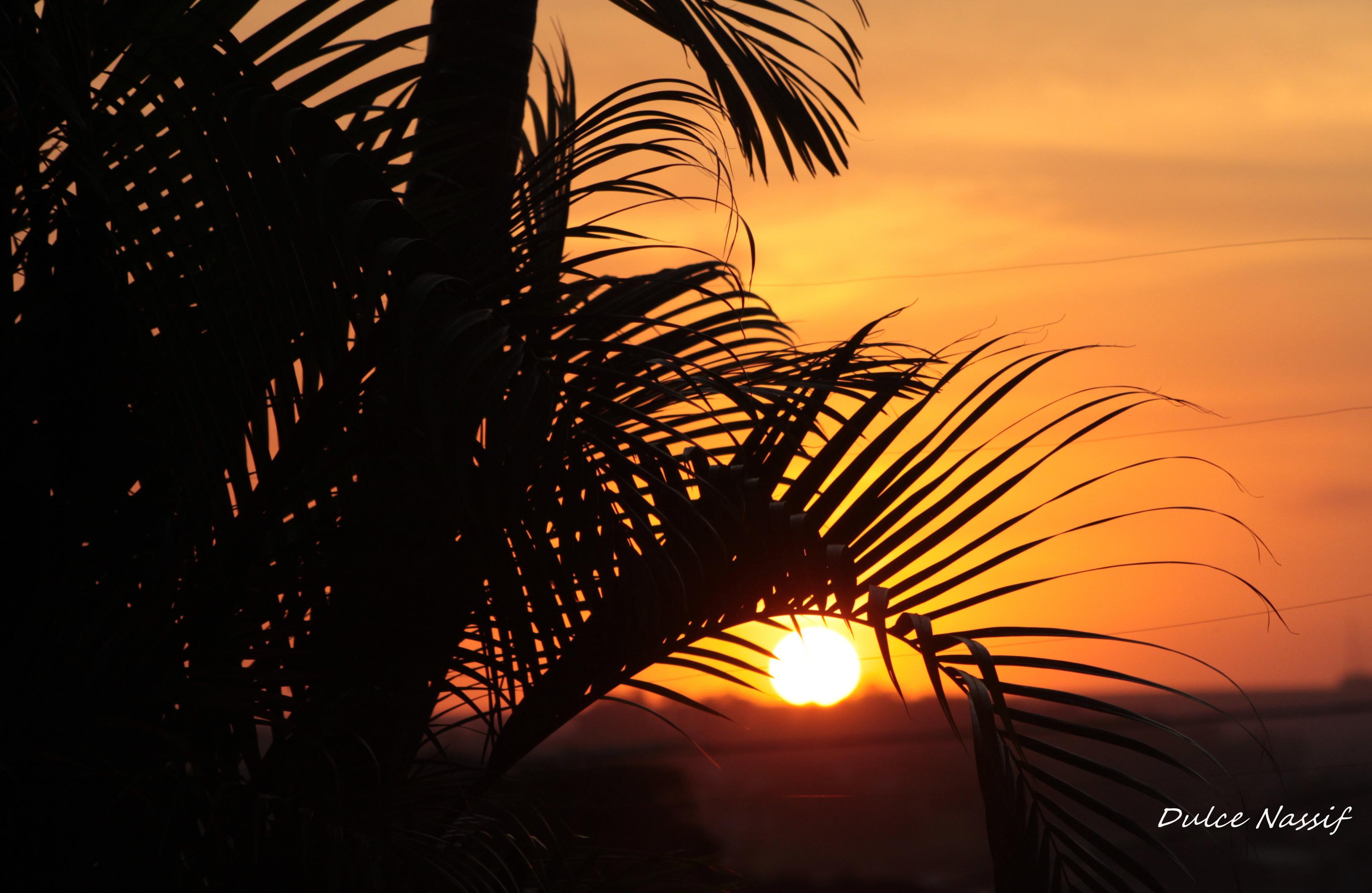 Wallpaper Sunlight Sunset Sky Silhouette Sunrise Evening