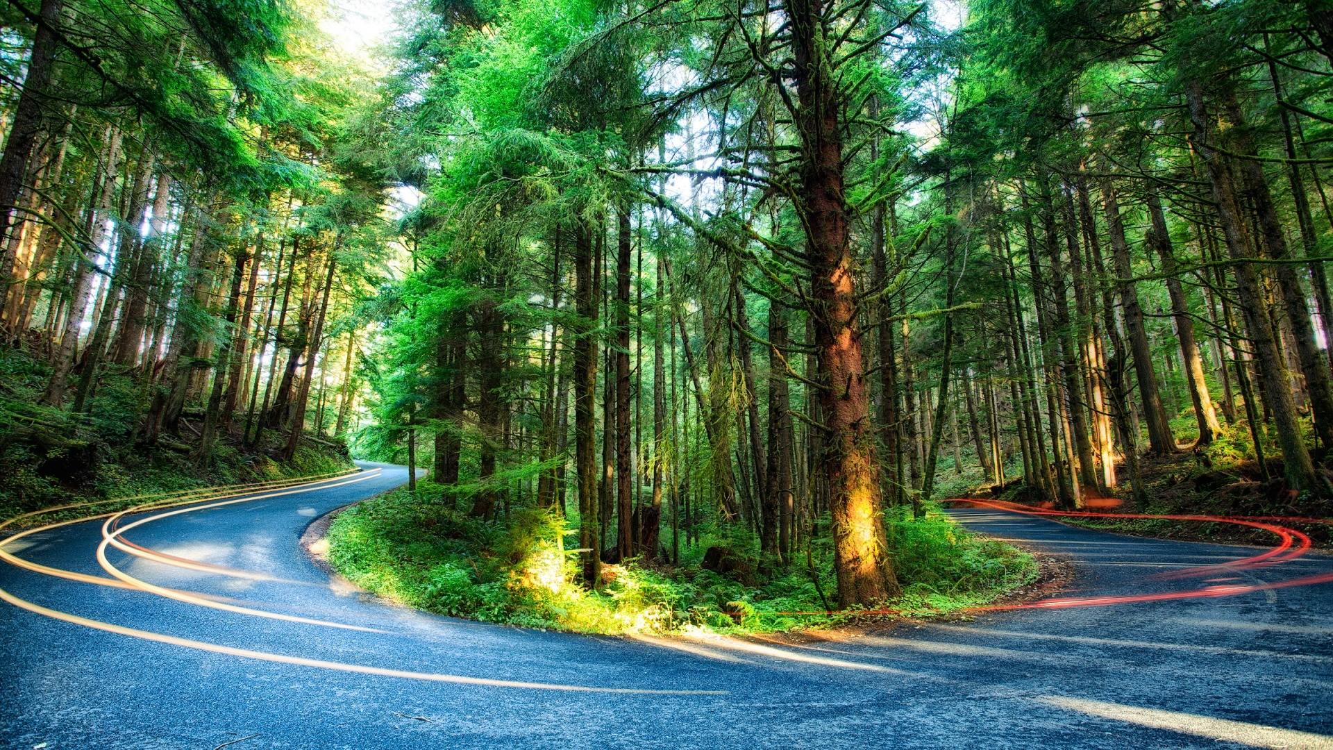 Wallpaper : sunlight, colorful, nature, plants, road, long exposure ...