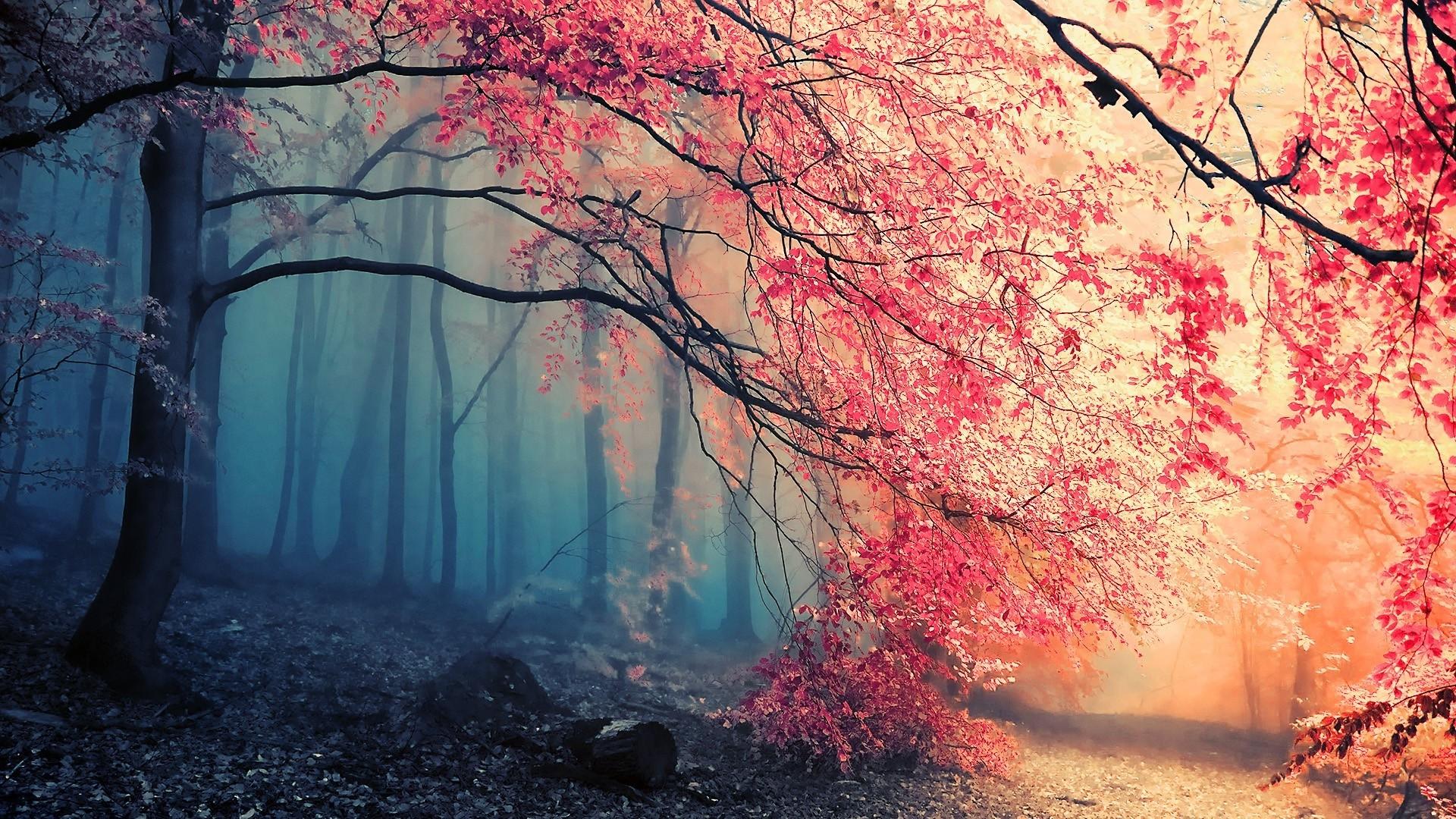 Hintergrundbilder Sonnenlicht B 228 Ume Wald Ast Morgen