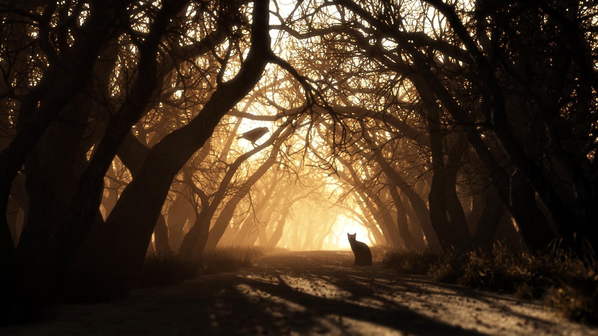 Augen Bäume Herbst Dunkle Nacht Wald Wald Wallpaper
