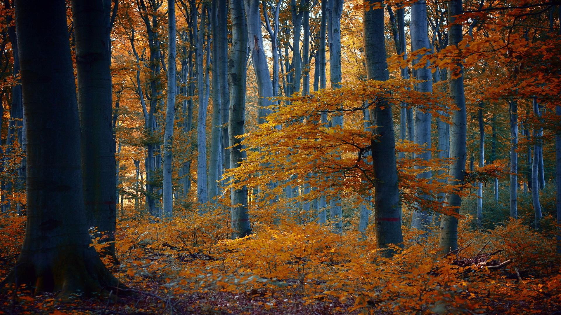 осенний лес фото картинки на рабочий стол вот