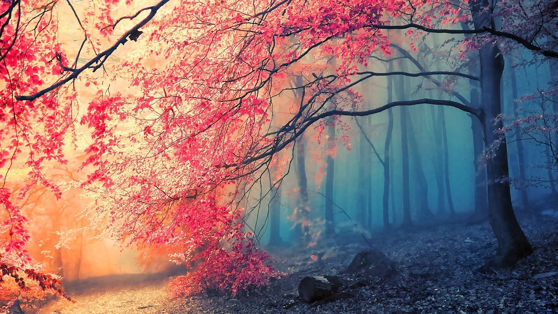 デスクトップ壁紙 日光 木 森林 秋 自然 ブランチ 桜の花 葉 工場 シーズン コンピュータの壁紙 19x1080 Smoovie 9532 デスクトップ壁紙 Wallhere