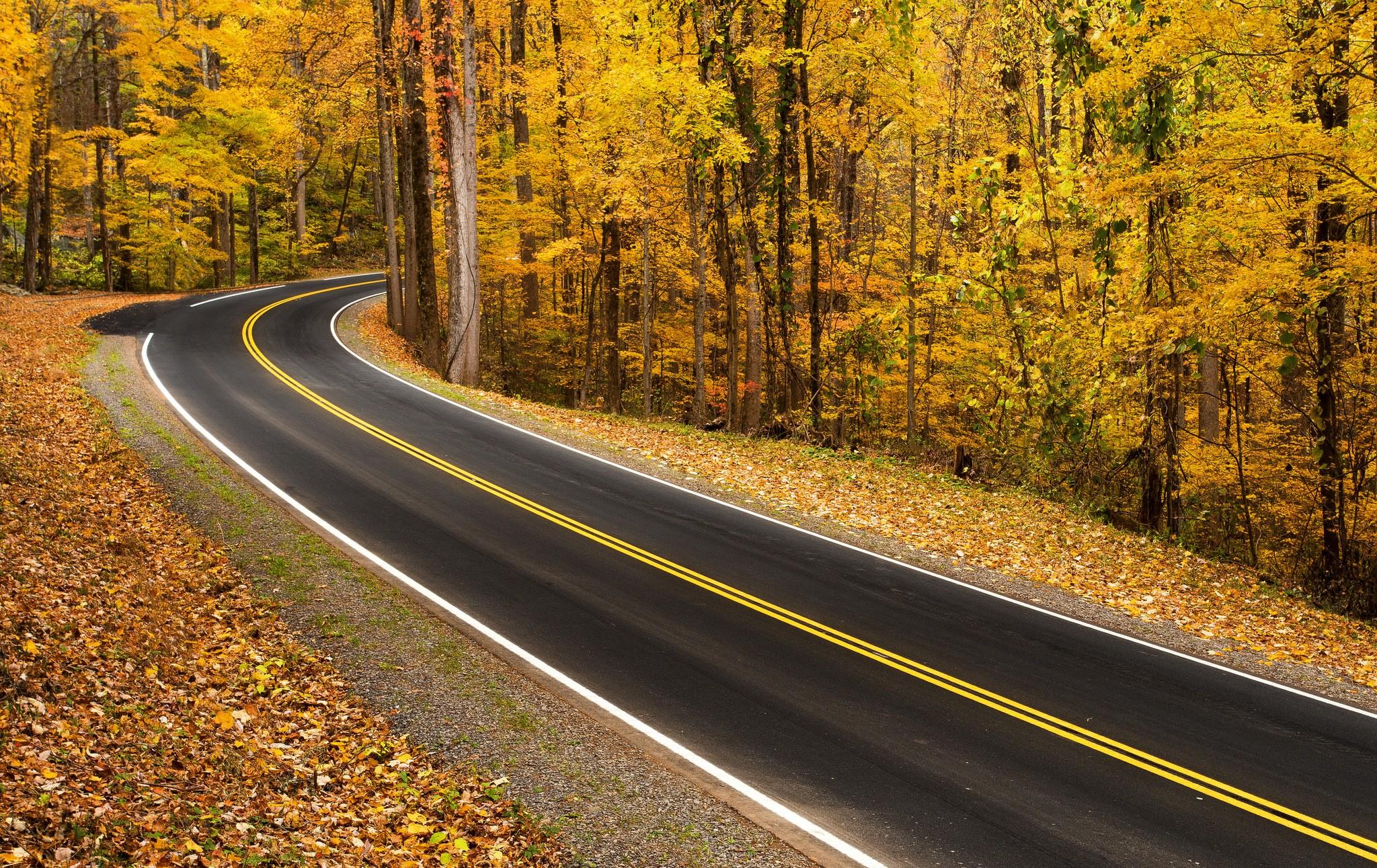 морская звезда картинки повороты лесных дорог благодарны сделаете