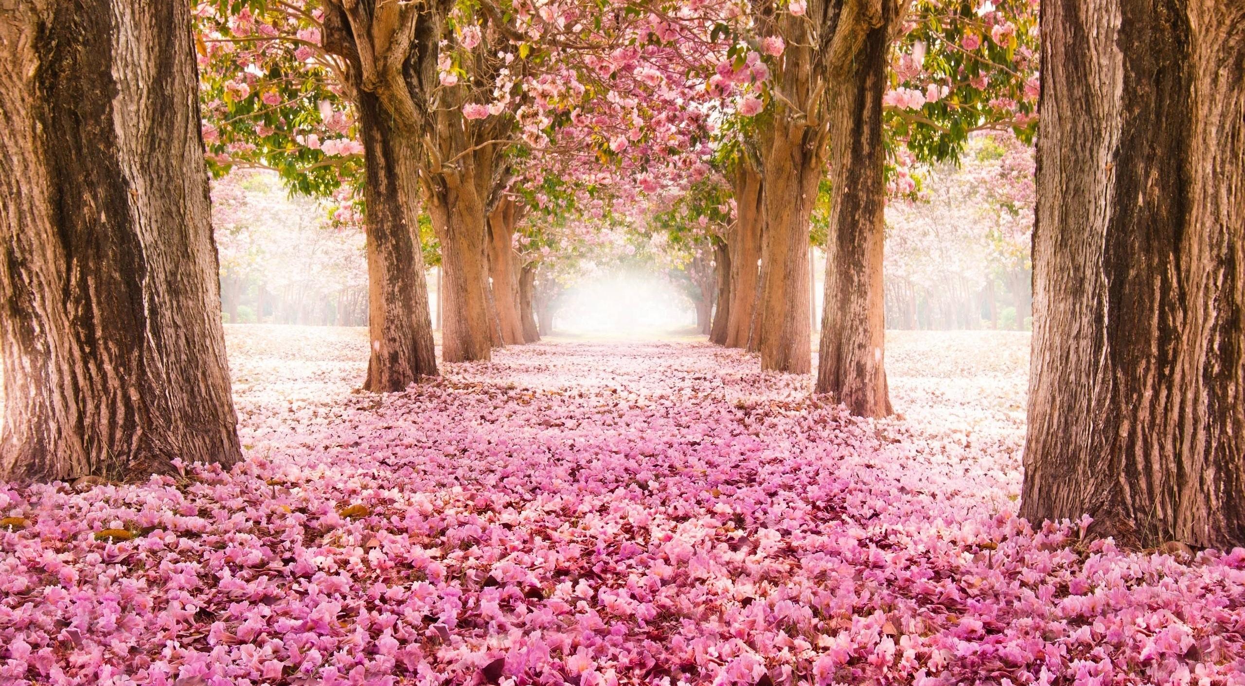the season i like most spring