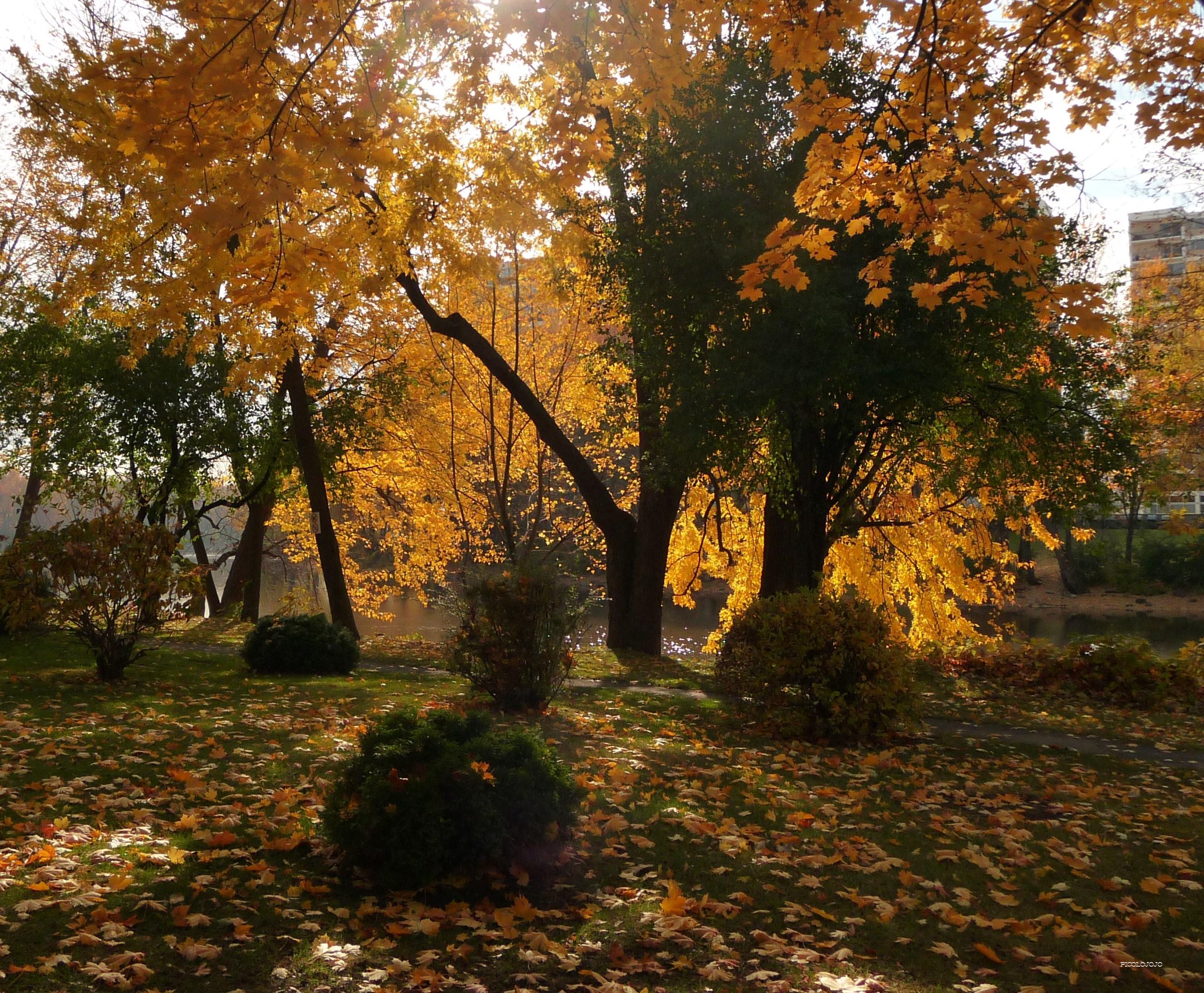 Fond d\'écran : lumière du soleil, des arbres, forêt, jardin ...