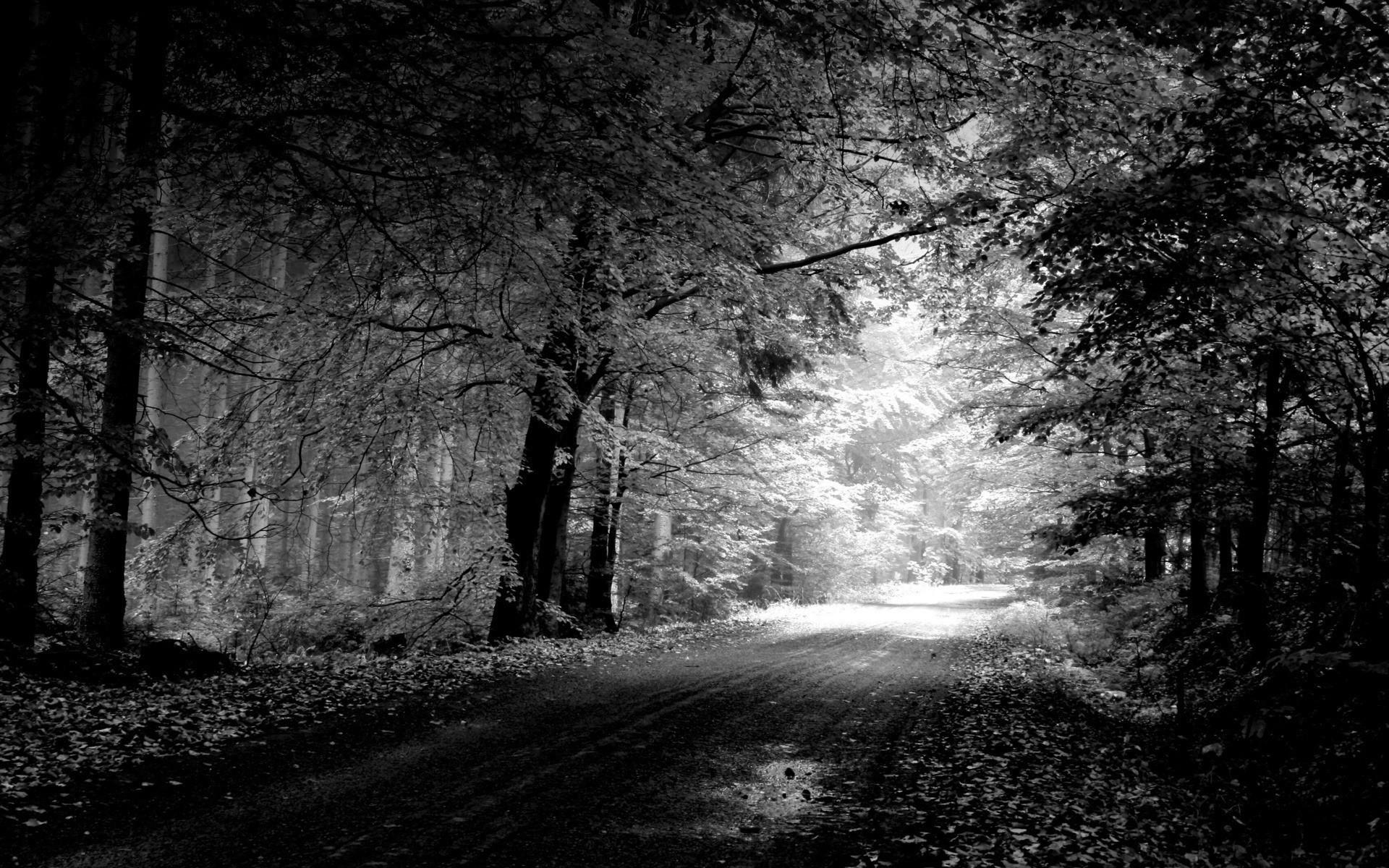 точные черно белое фото лесного пейзажа стандартной церемонии вручения