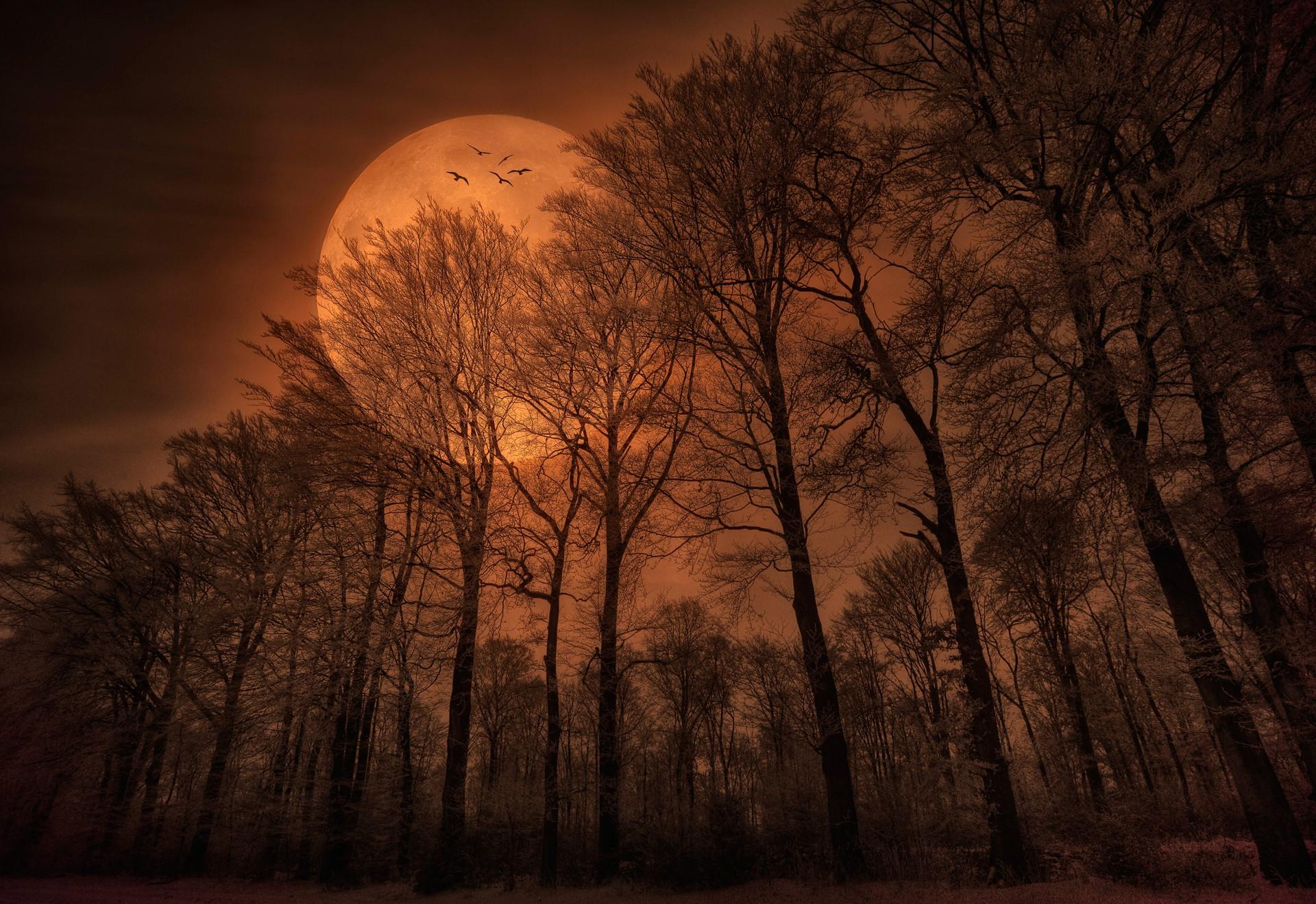 Sunlight Trees Forest Monochrome Sunset Night Nature Spooky Branch Sunrise Moon Evening Morning Mist Atmosphere Dusk