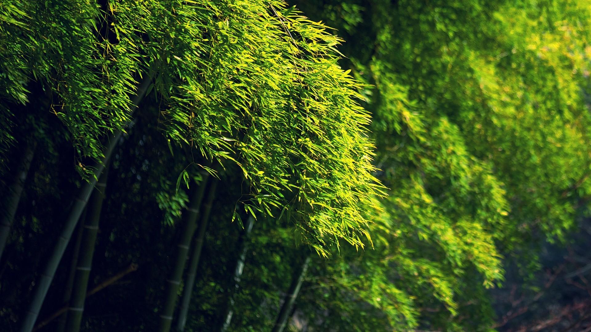 картинки релаксация лес может вообще