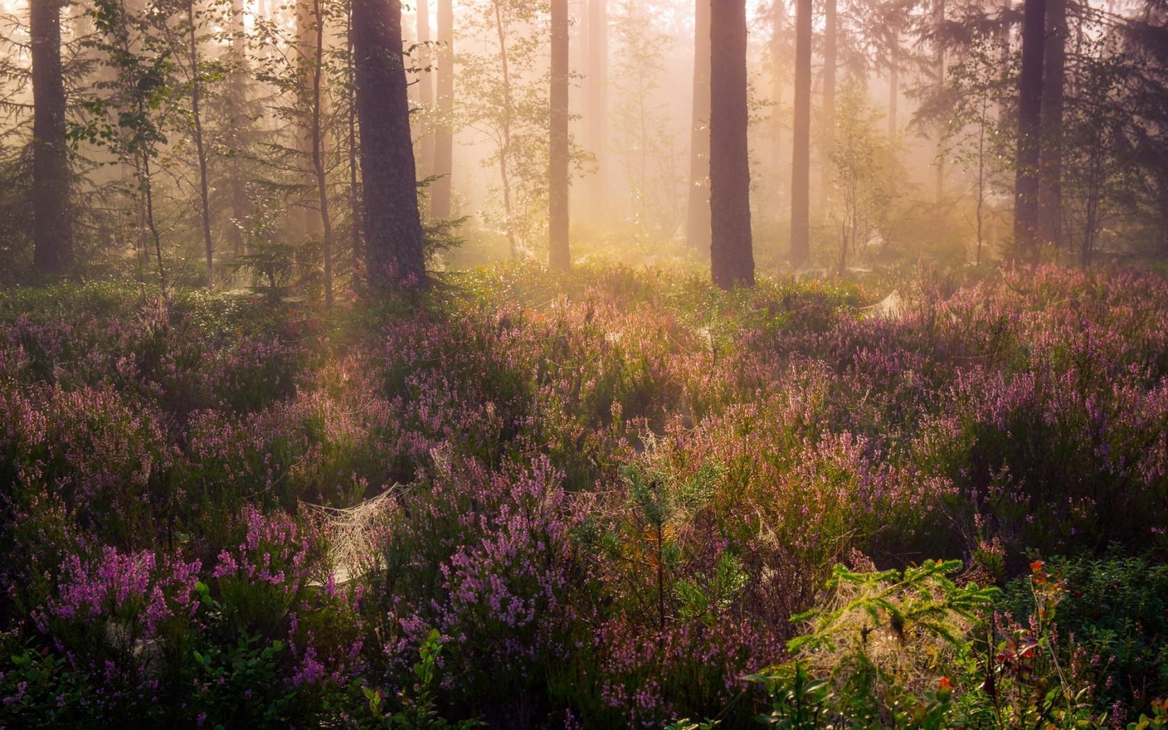лес летним утром картинки этот был случаен