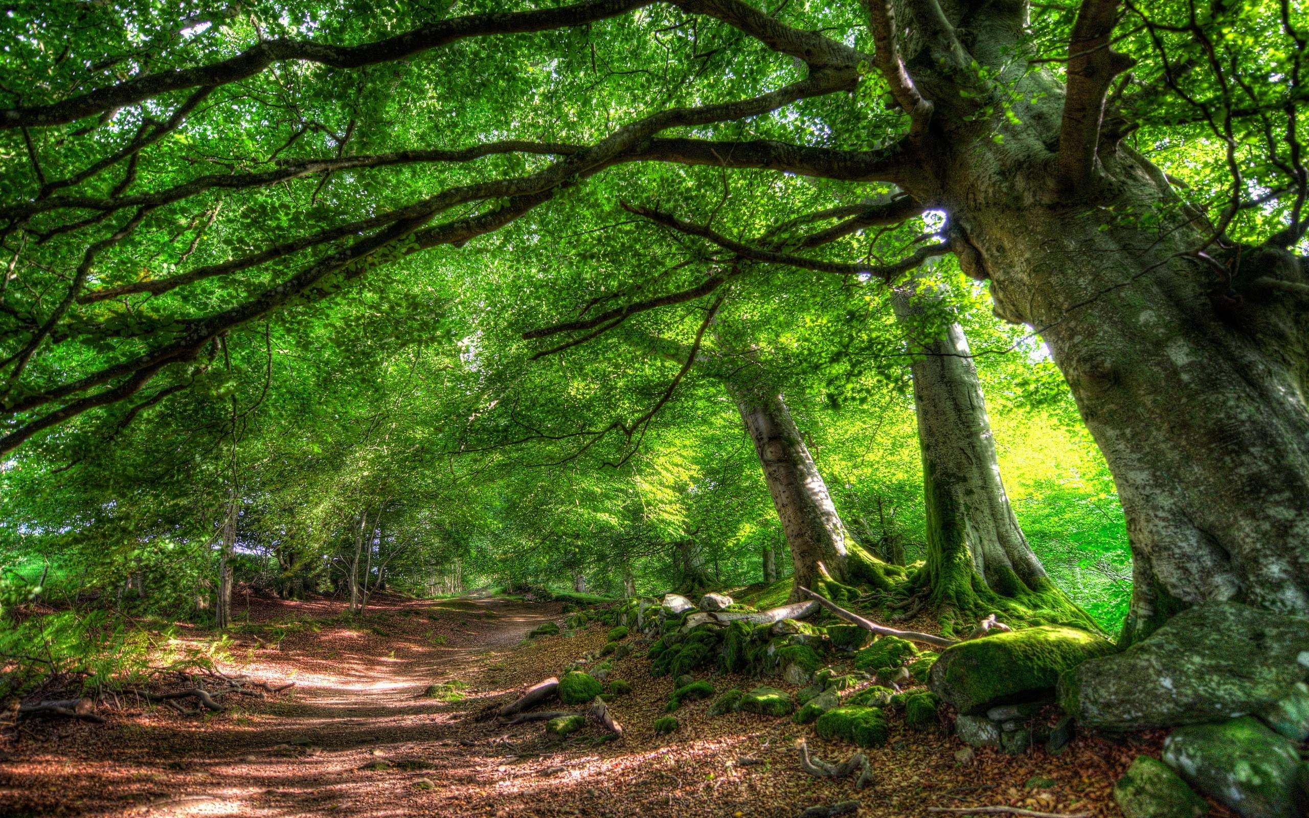 Wallpaper Sunlight Trees Nature Park Branch Green