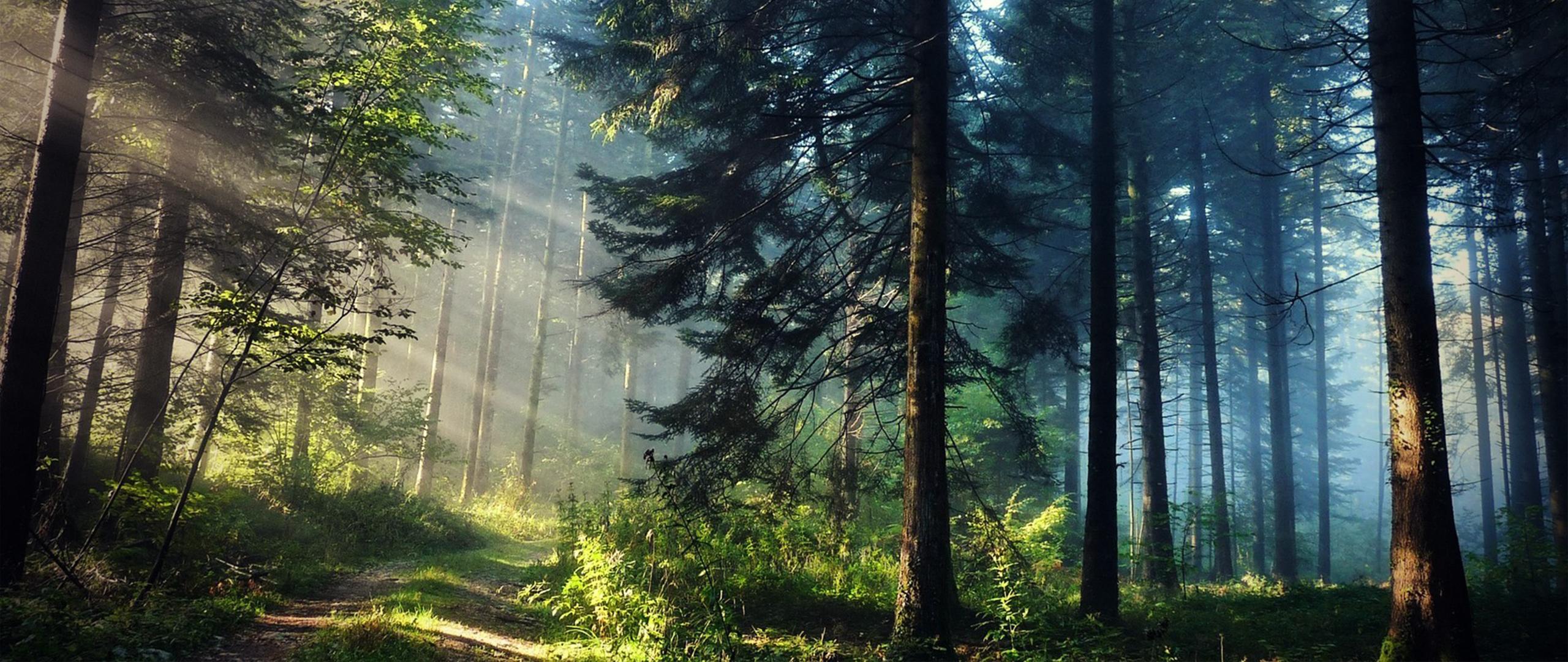 Wallpaper Sunlight Trees Nature Photography Green