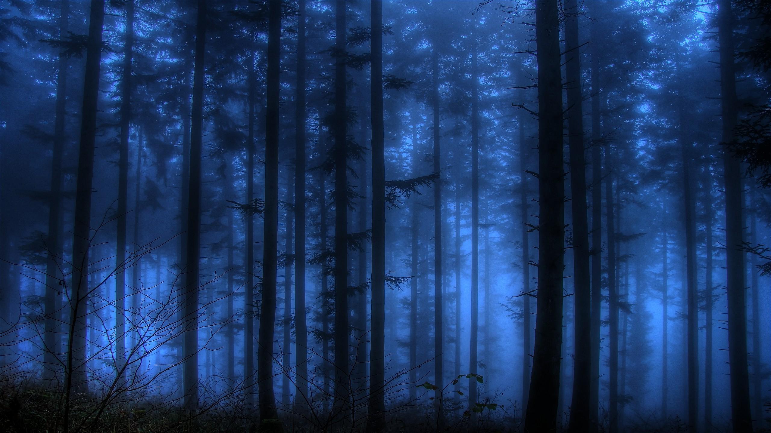 Красивый темный лес картинки