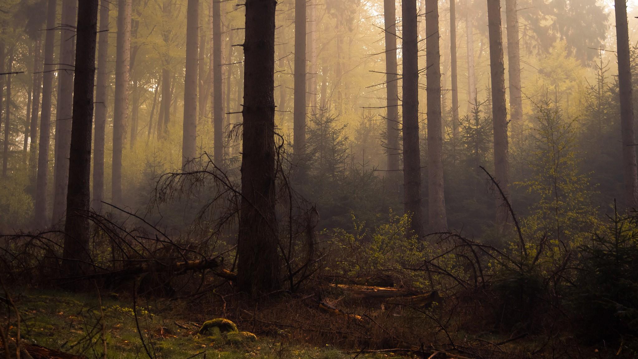 обои на рабочий стол лес в тумане мрачноватый синие брови подведенные