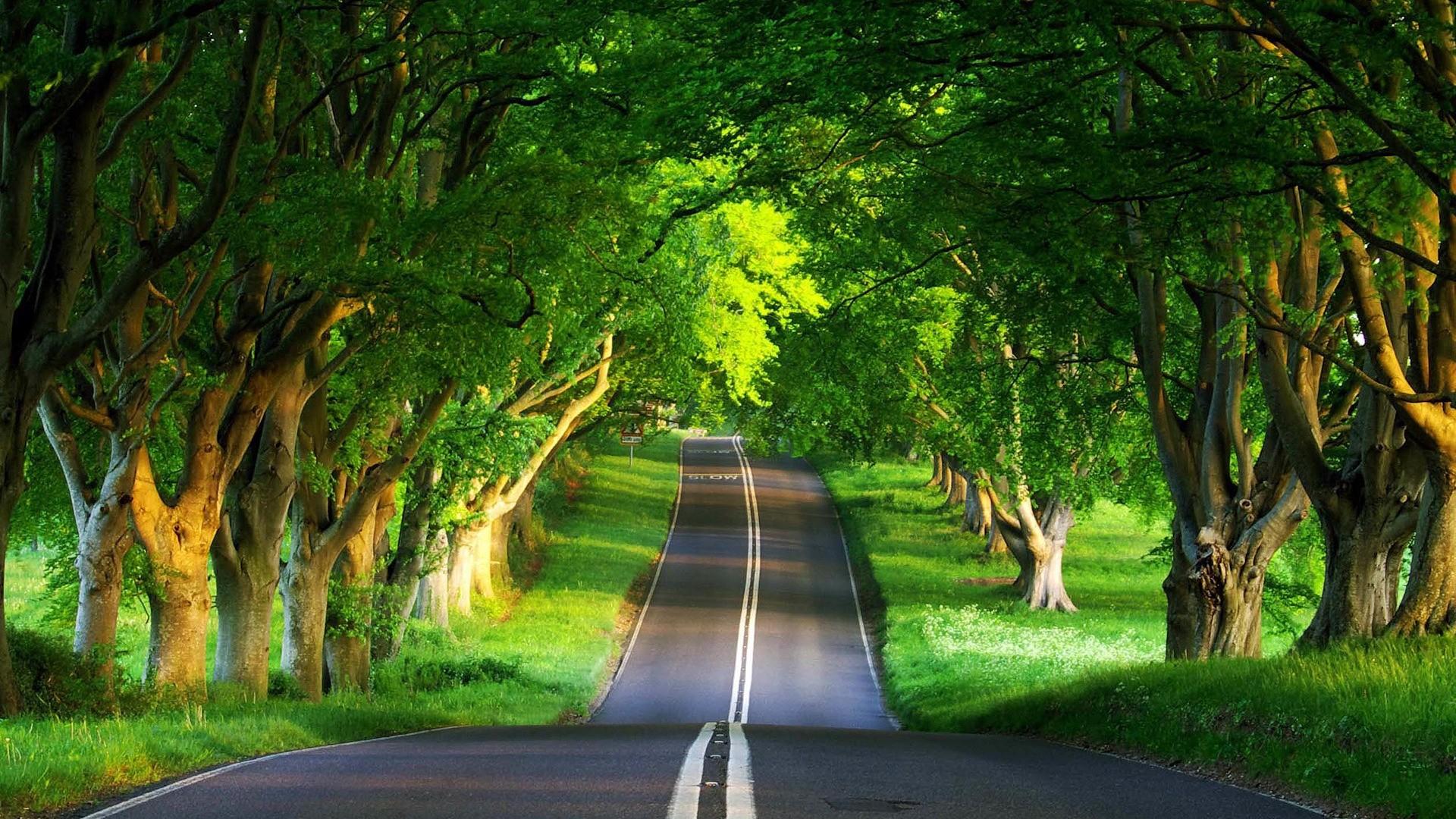 Fondos De Pantalla Luz De Sol árboles Bosque Naturaleza