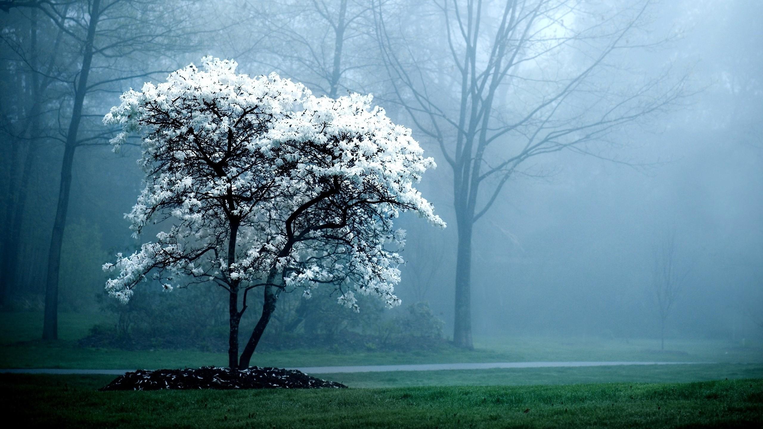 Деревья в тумане картинки