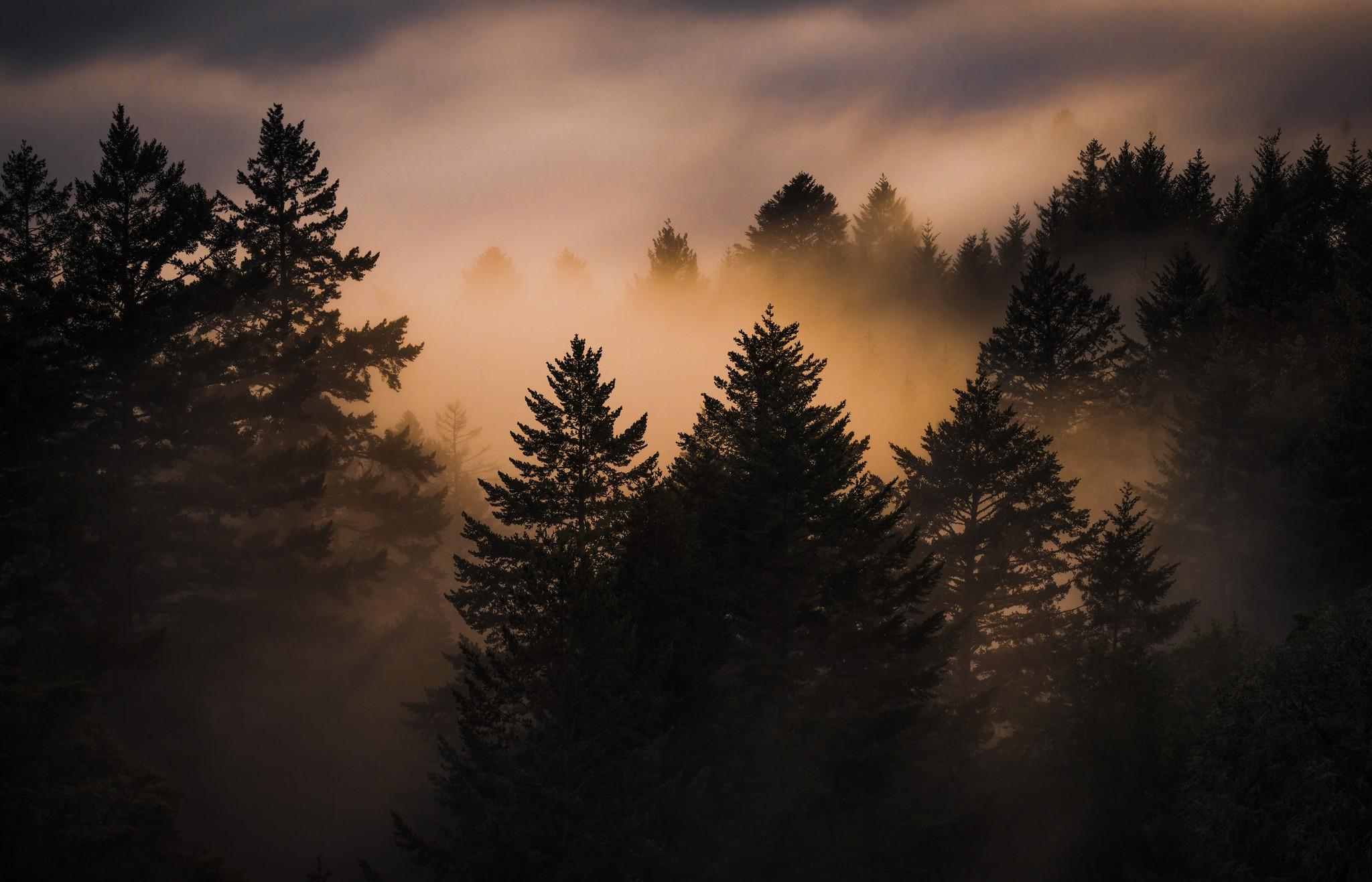 внимательные сотрудники картинки леса как в сумерках себе торунь