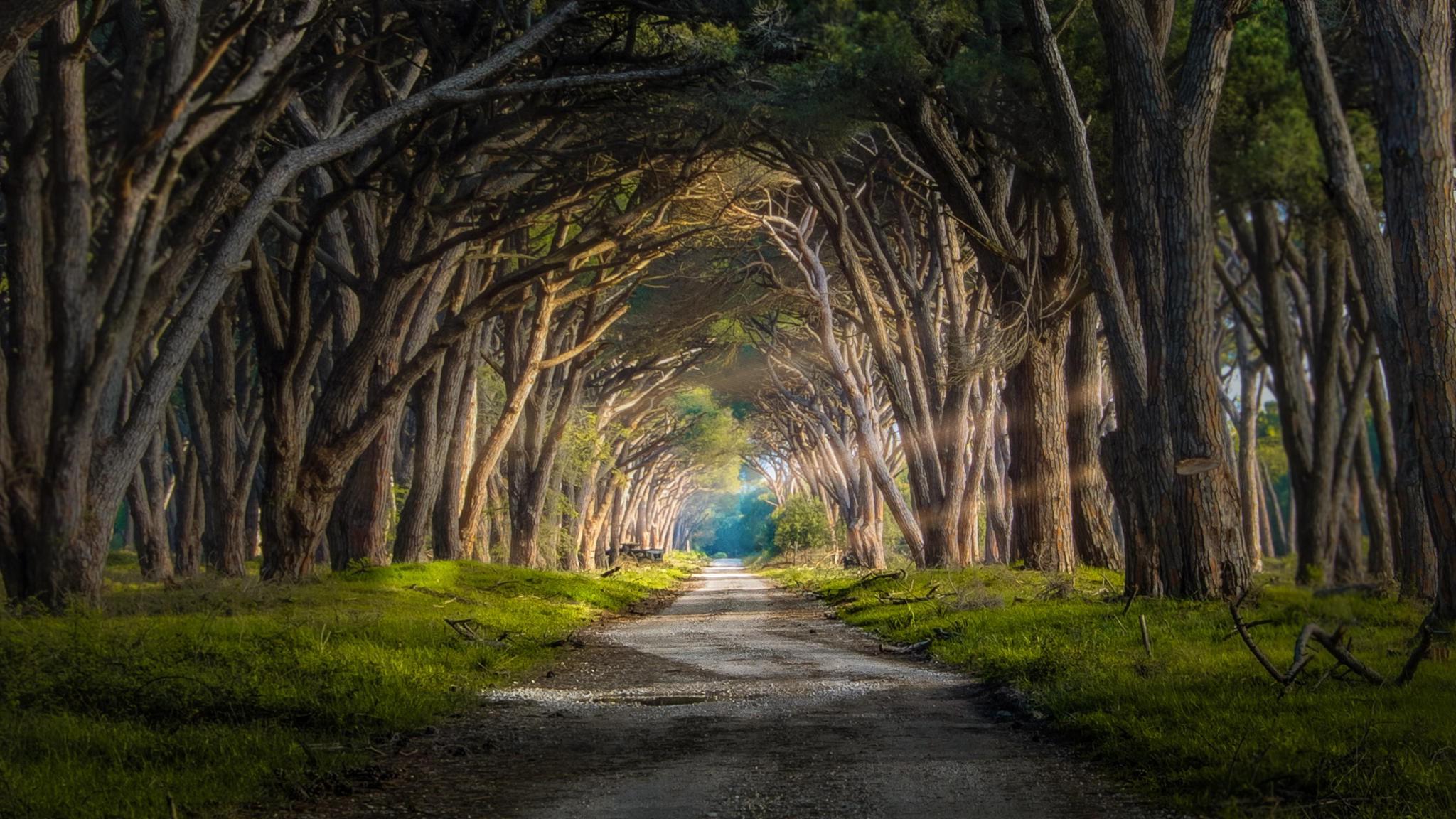 Wallpaper Sunlight Trees Landscape Italy Nature Sky