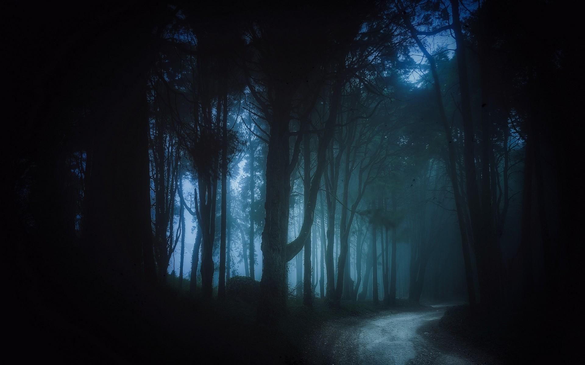 Sunlight Trees Landscape Forest Black Dark Night Mist Moonlight Dirt Road Atmosphere Path Midnight Light Fog