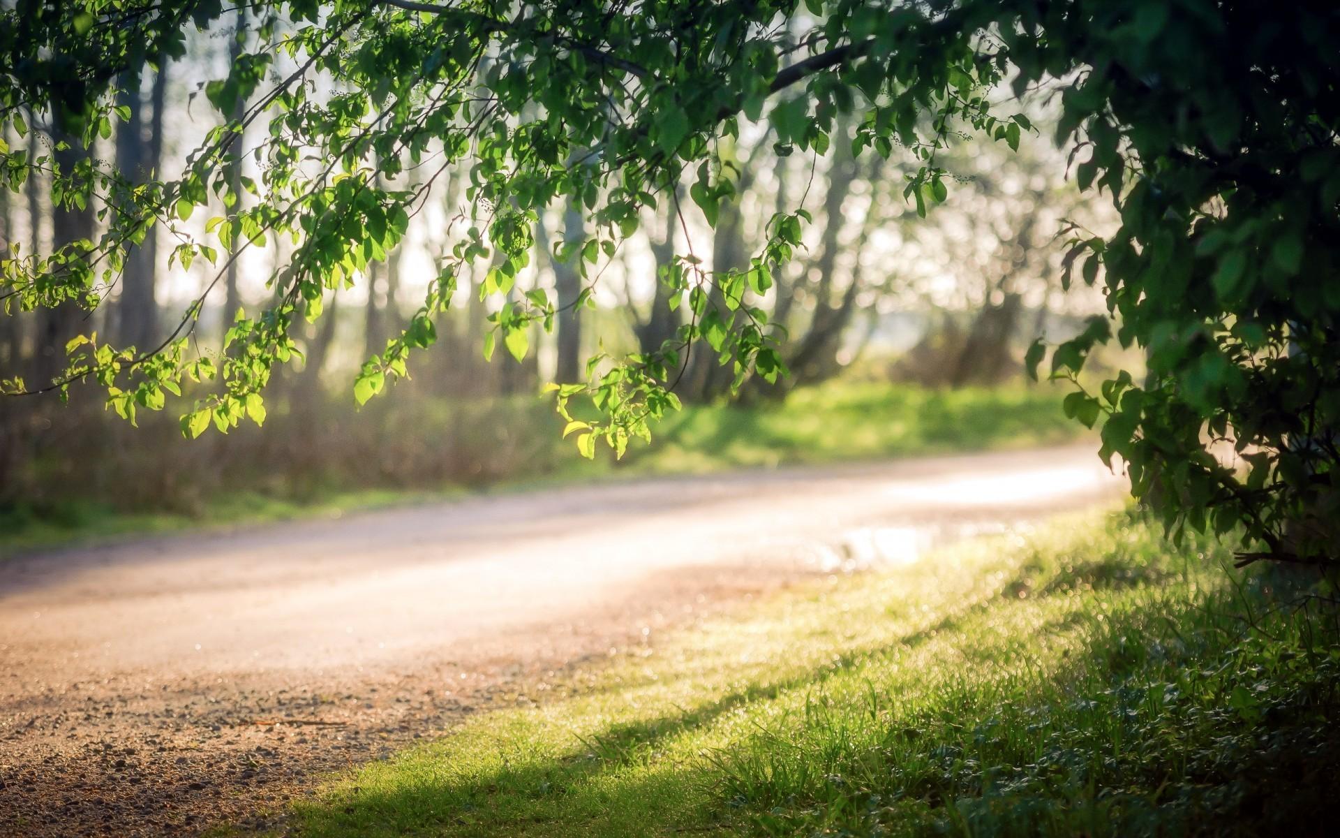 Fondos de pantalla luz de sol rboles paisaje bosque for Arboles de jardin