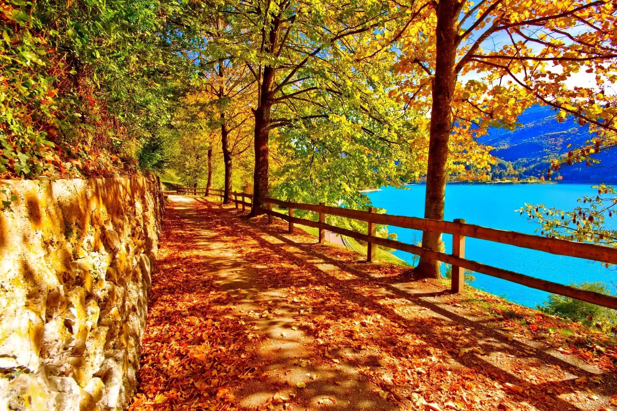 foto de Fond d'écran : lumière du soleil des arbres paysage