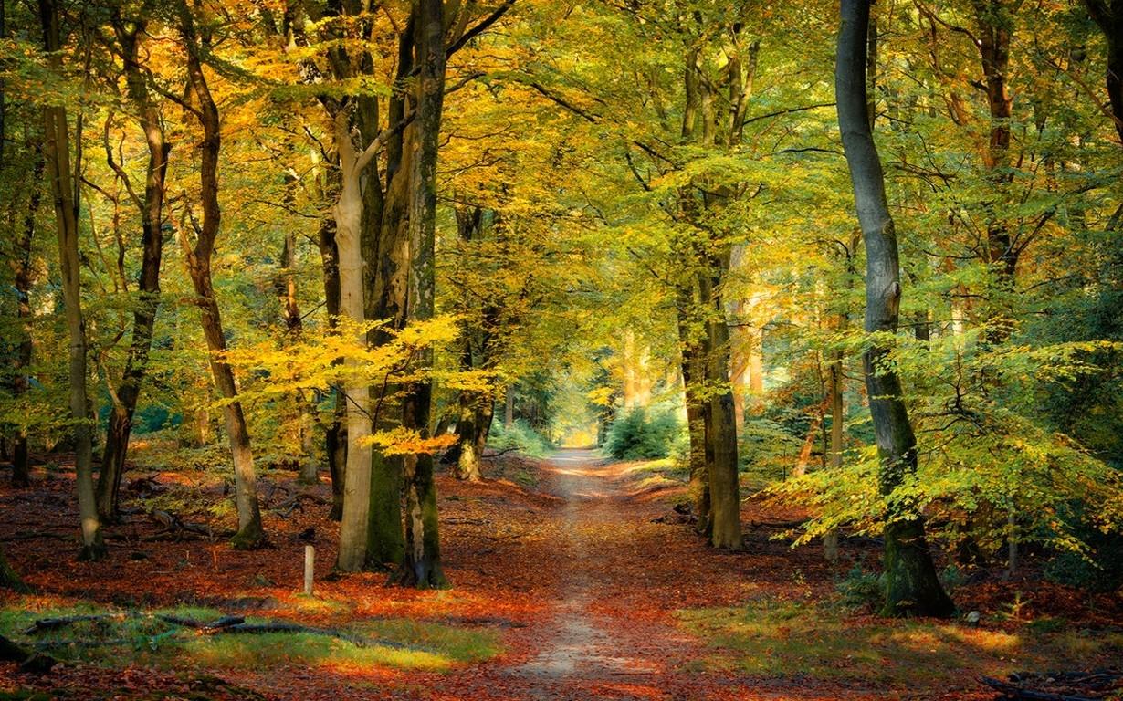 Wallpaper Sunlight Trees Landscape Fall Leaves