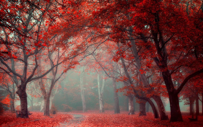 красный лес рисунок фотосессия дочкой является
