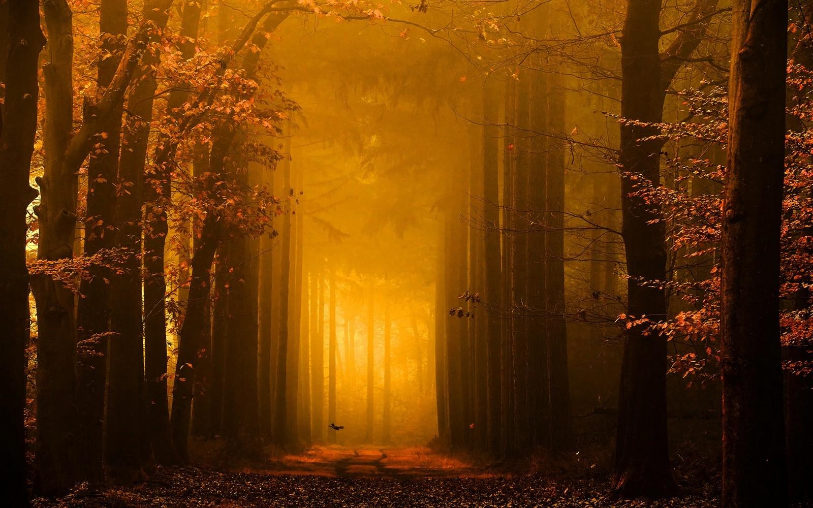 Wallpaper Sunlight Trees Landscape Forest Fall