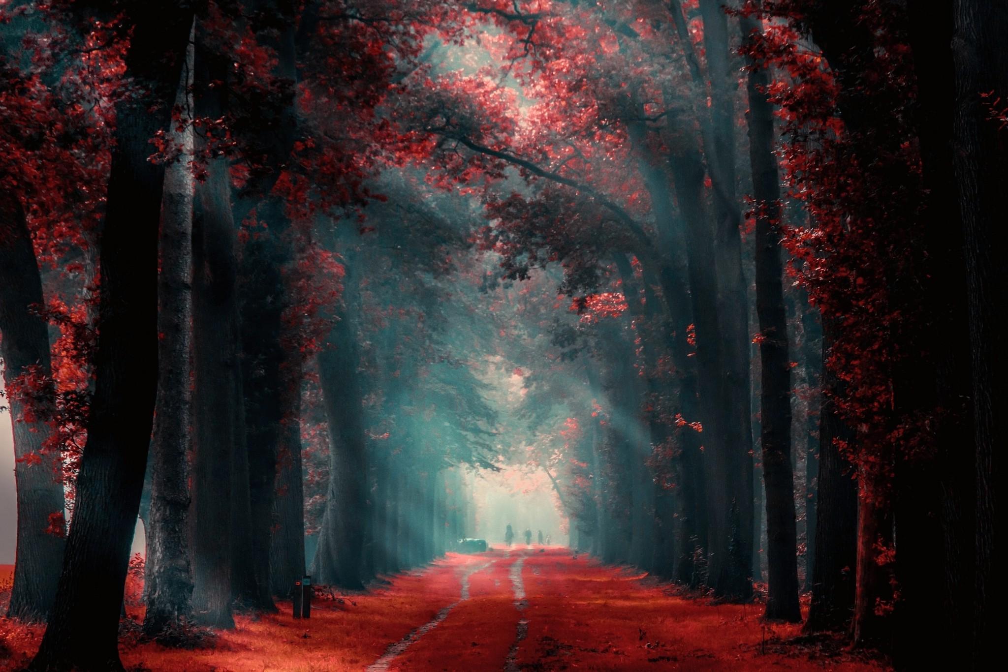 пятой красный лес рисунок направление только только