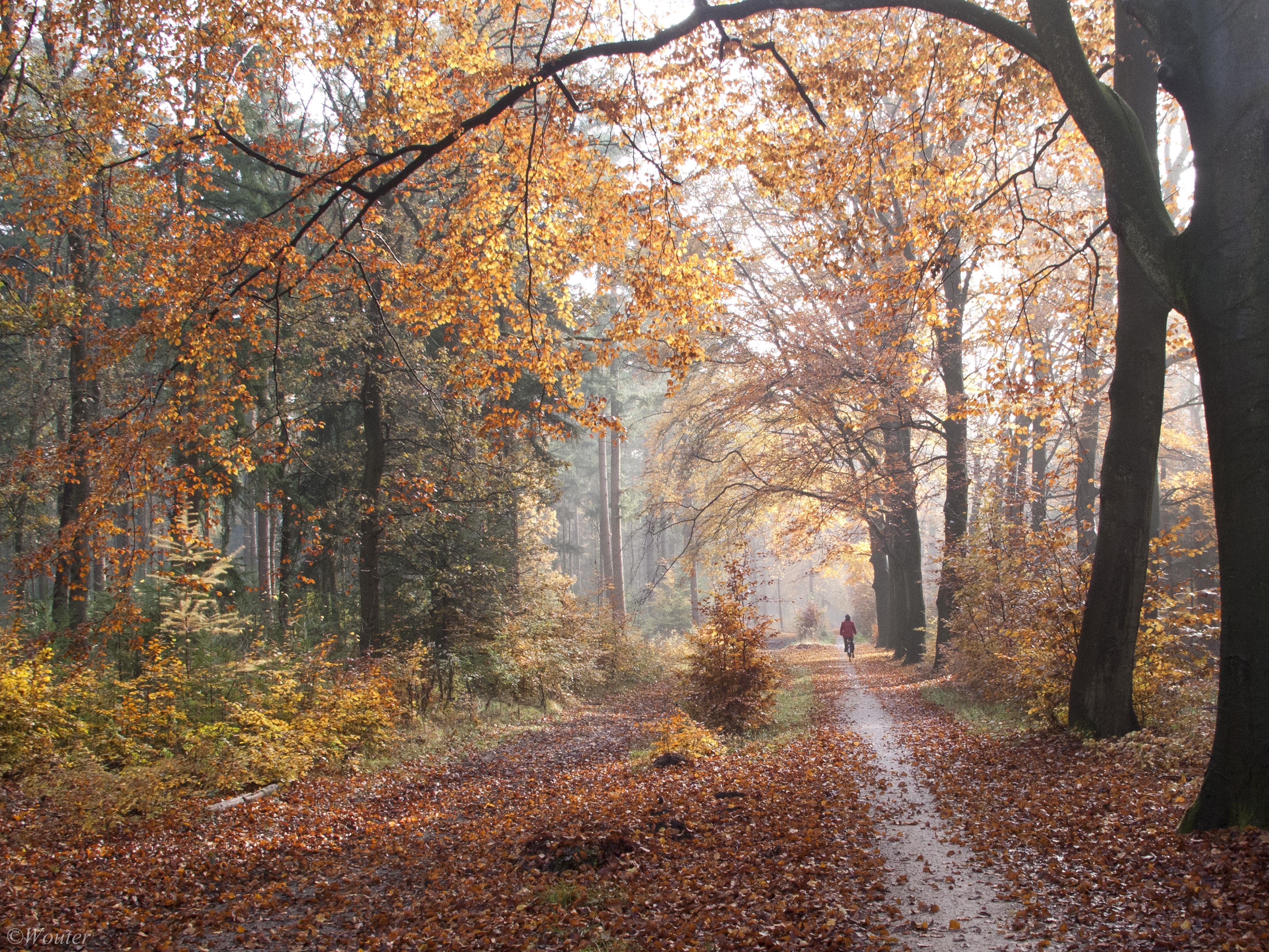 Wallpaper Sunlight Trees Landscape Fall Nature