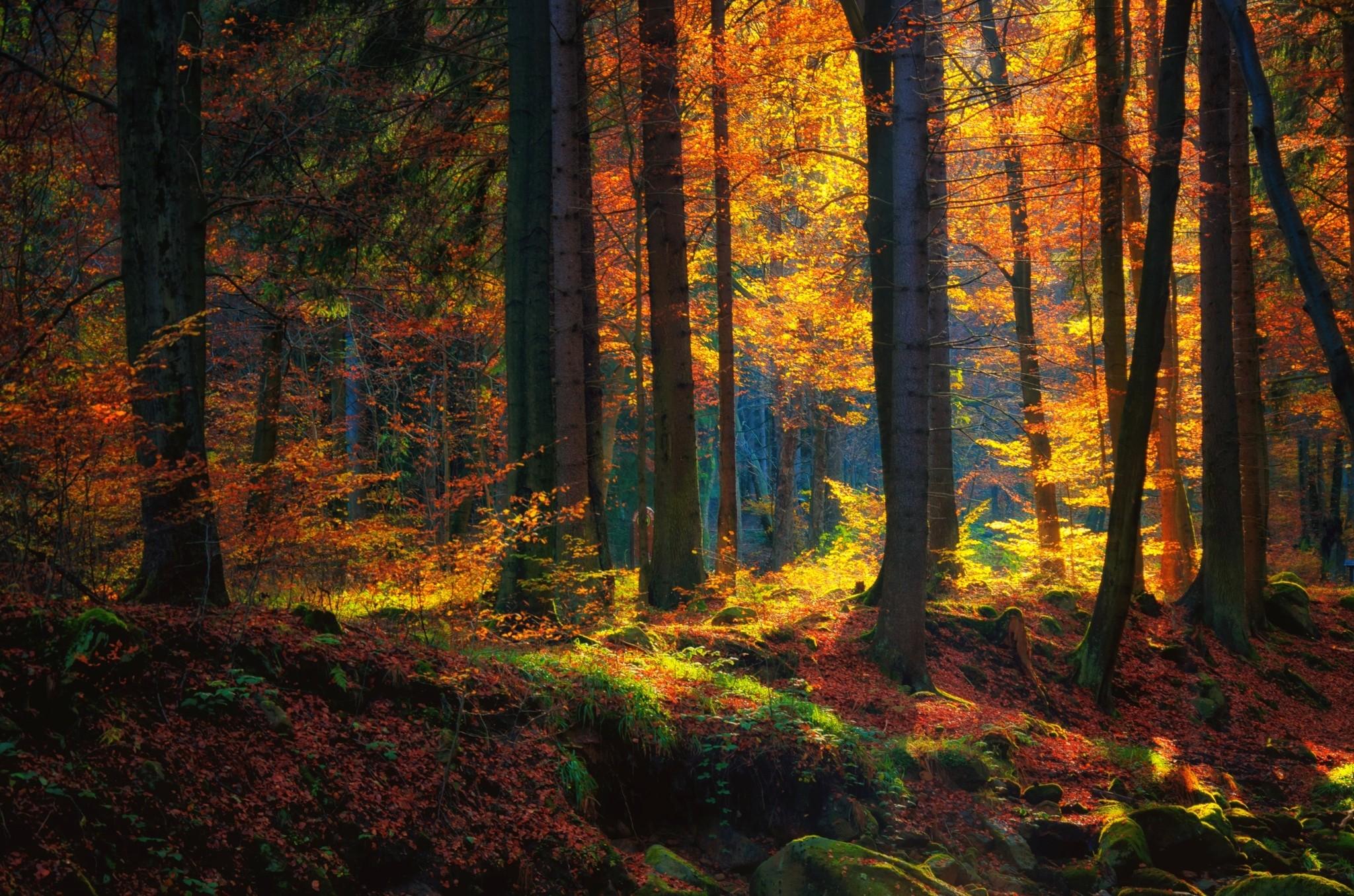 фото природа осеннего леса получили урон