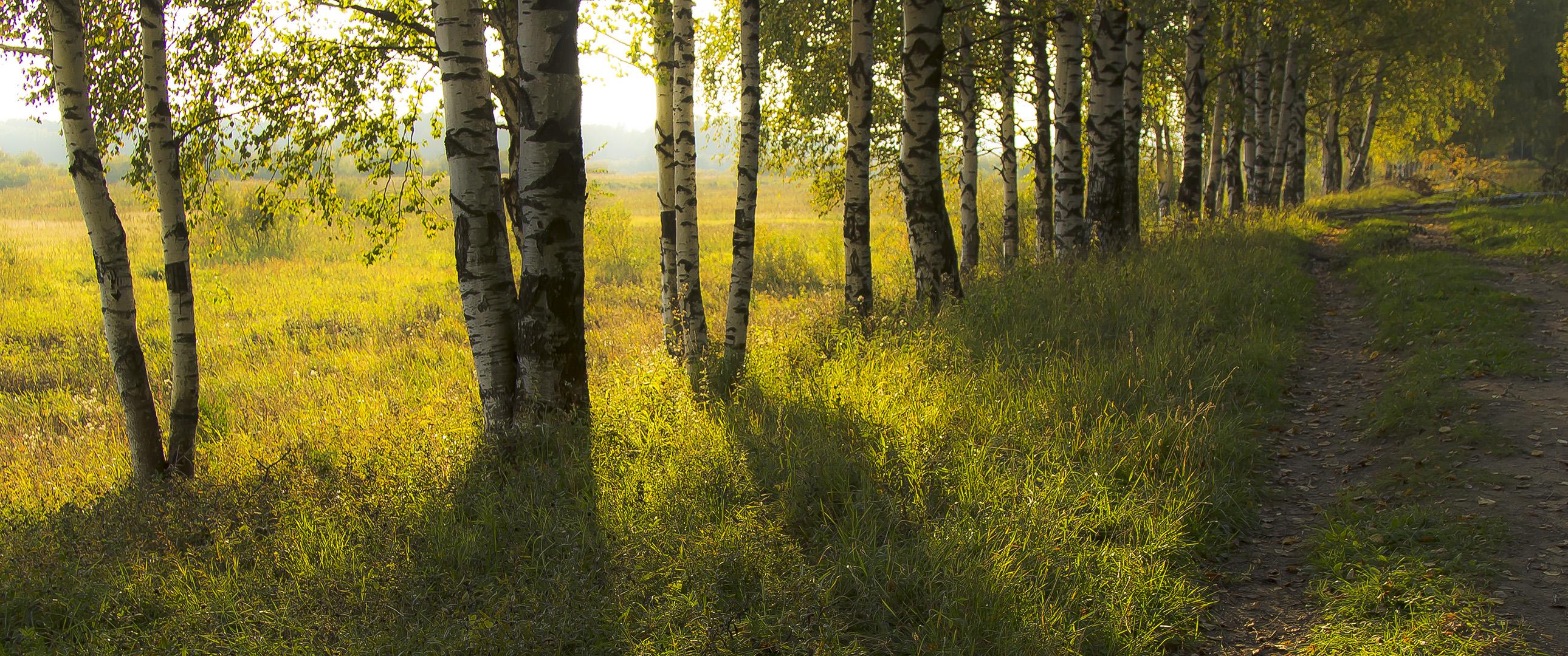 Обои тропа, осень, березы. Пейзажи foto 16