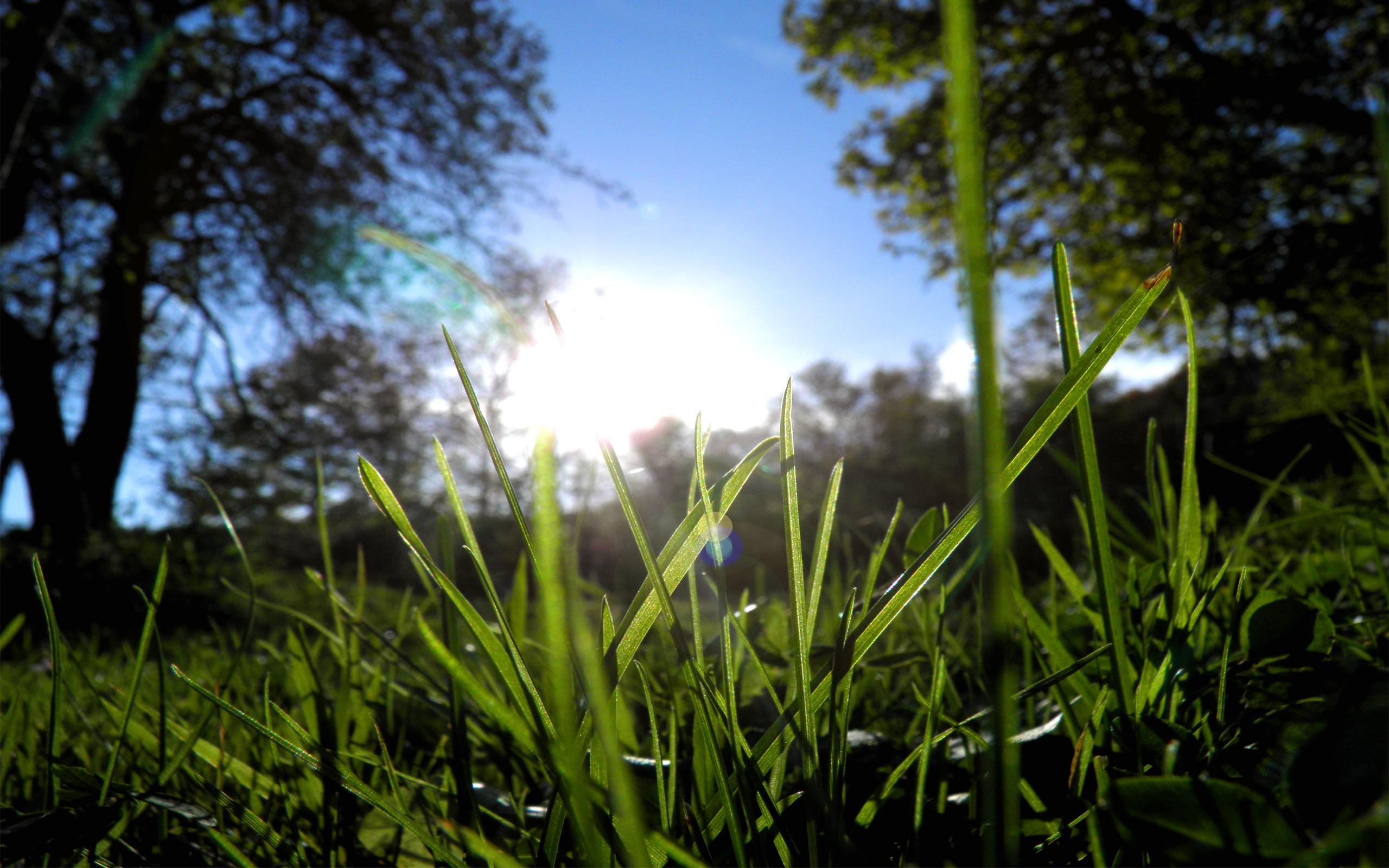 глаза, картинка утро трава природа что окна