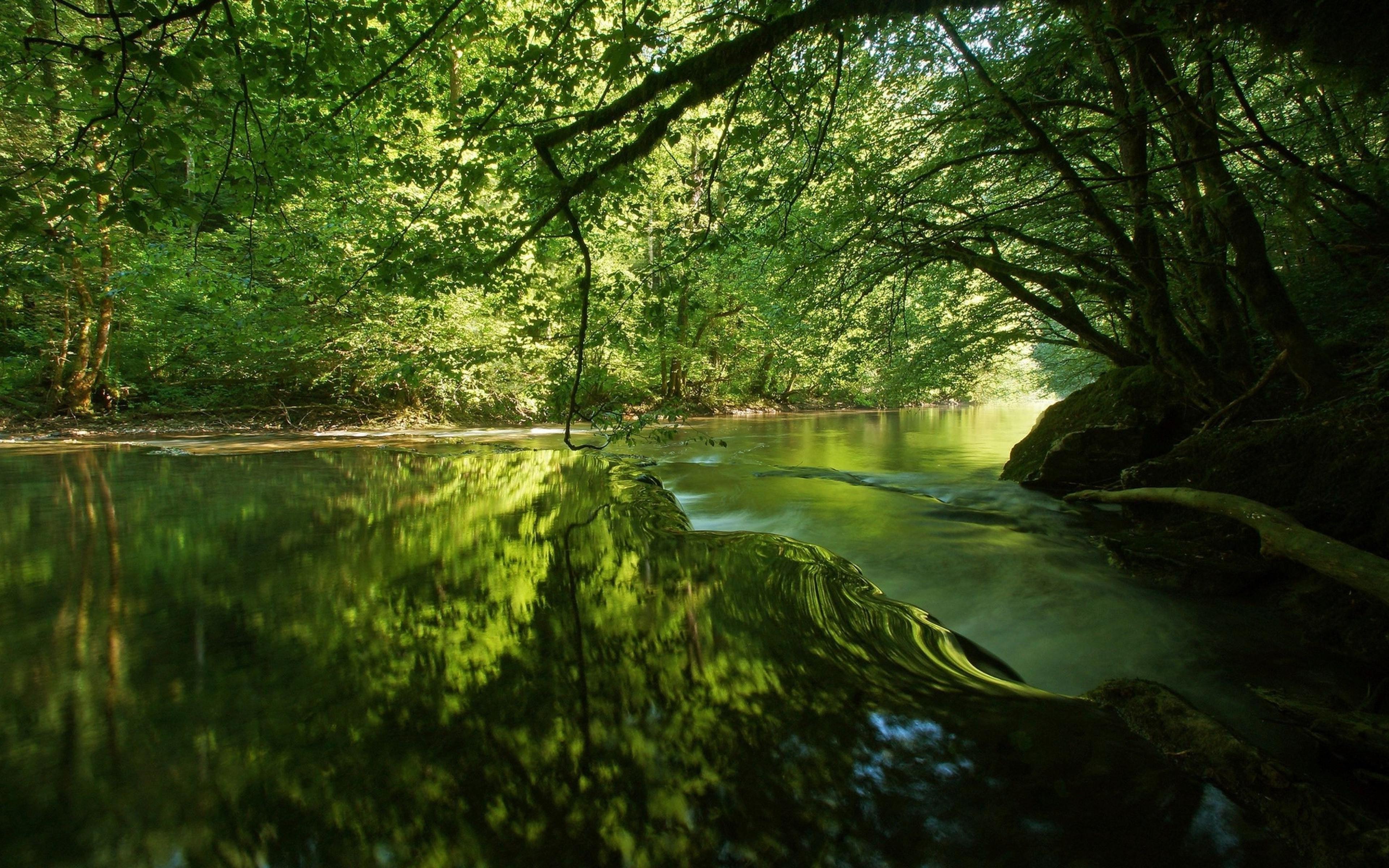 Wallpaper Sunlight Trees Landscape Lake Nature