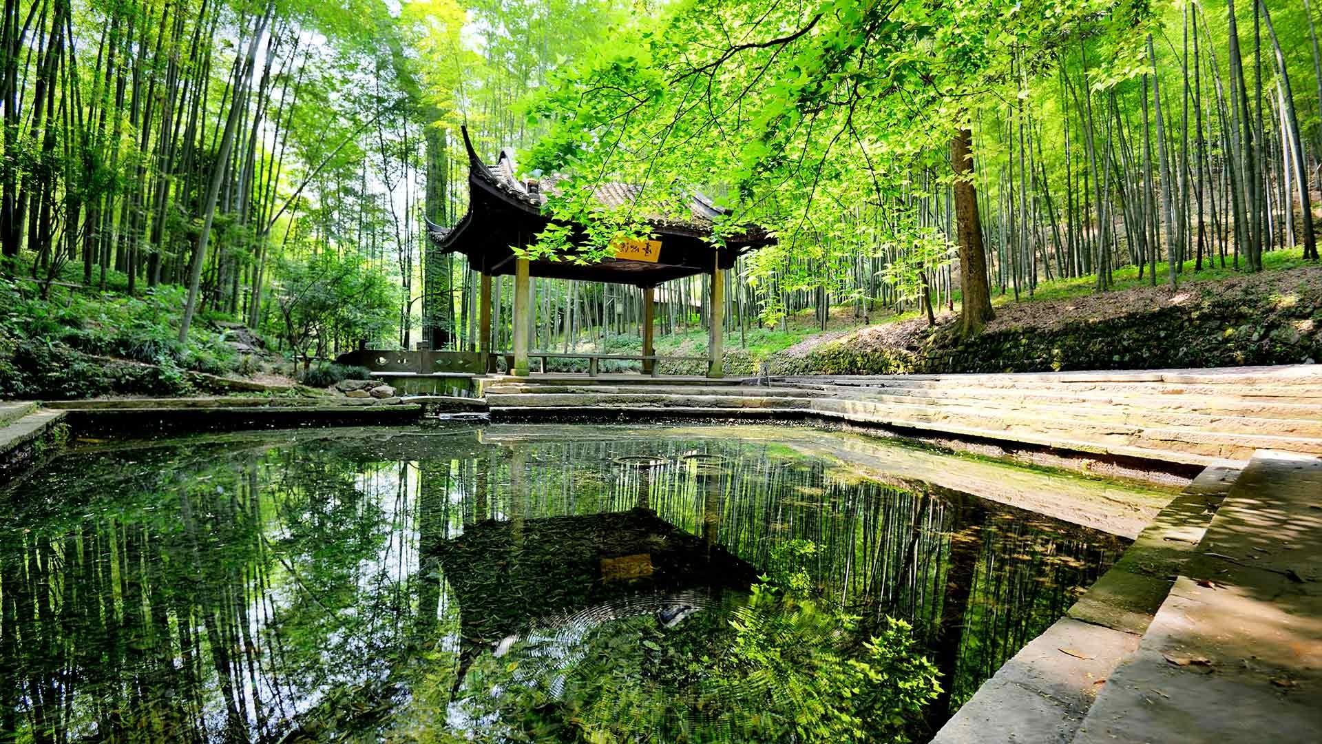 берегу картинки природа пруд камни бамбук высокие, отчасти оправдывают