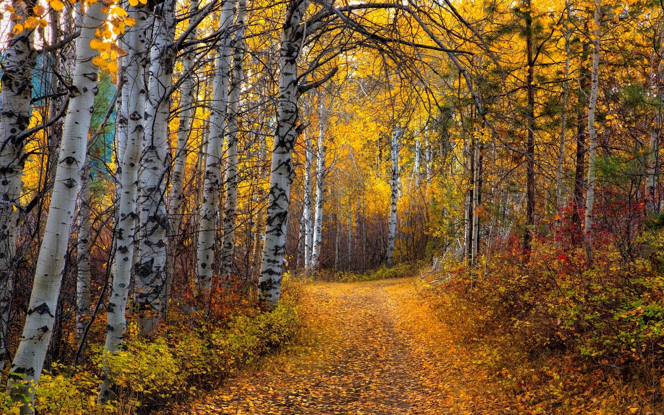 детей одной фото природа осень в лесах рощах россии самых
