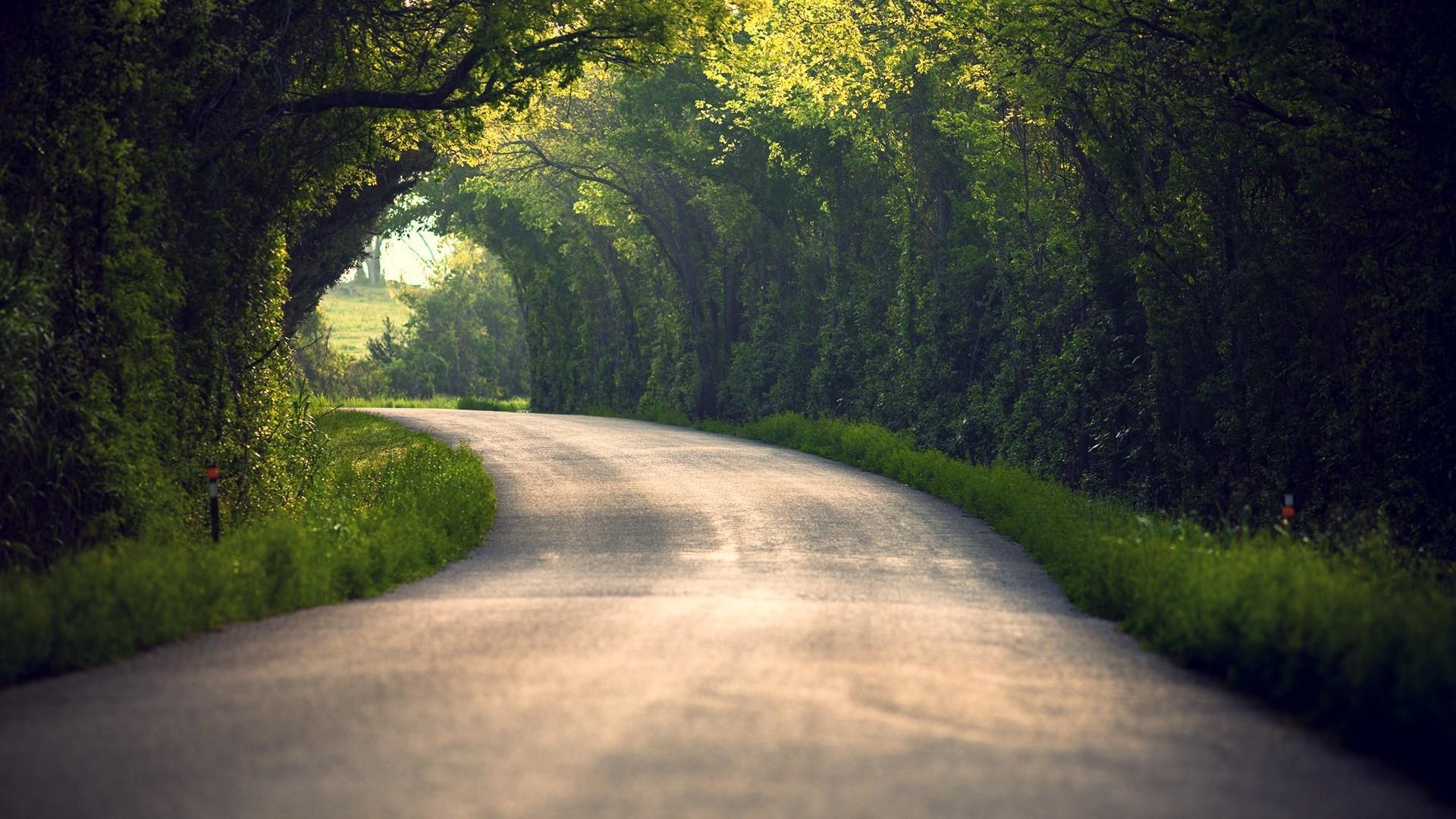 Wallpaper : sunlight, trees, landscape, forest, leaves, nature, grass, road, green, morning