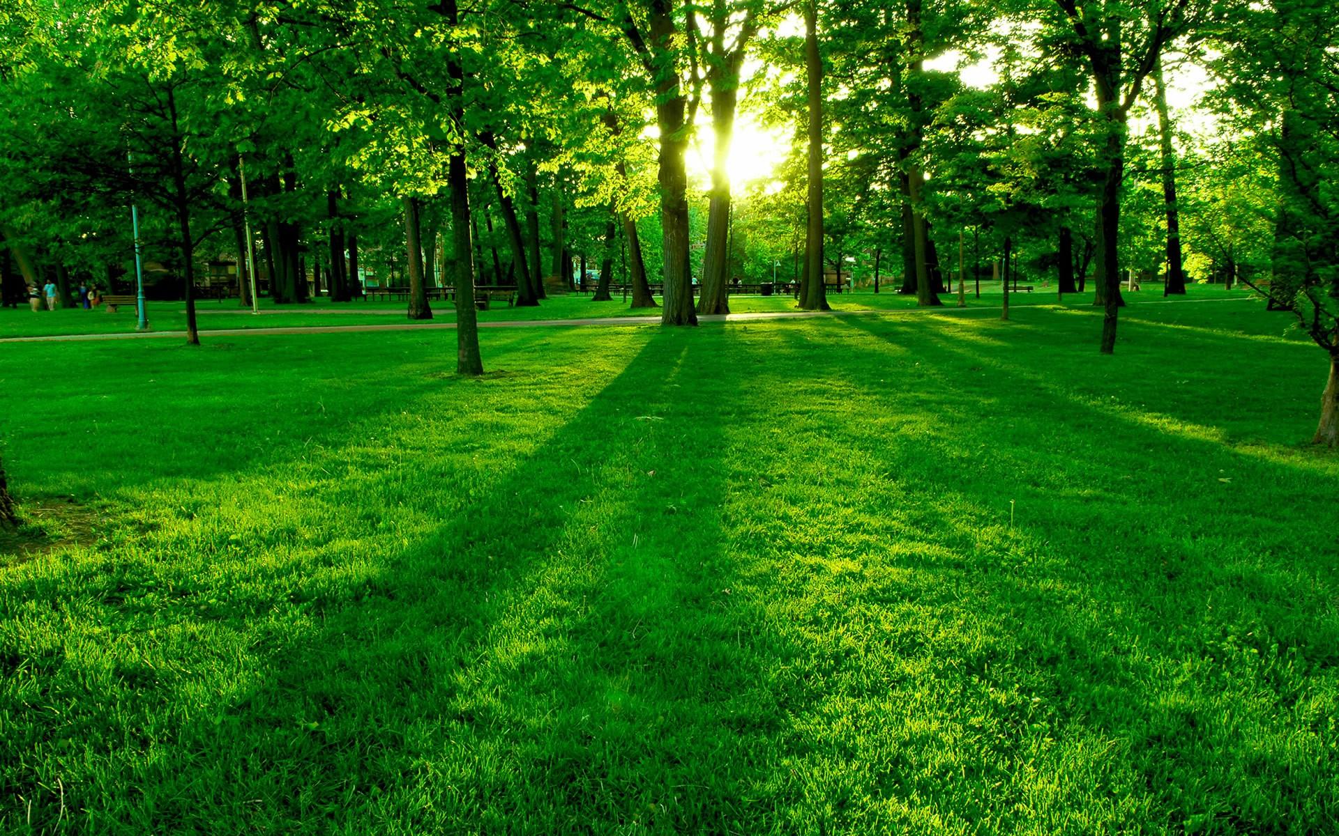 https://get.wallhere.com/photo/sunlight-trees-landscape-forest-nature-grass-park-plants-field-photography-branch-green-structure-golf-course-light-tree-leaf-grassland-plant-pasture-meadow-lawn-woodland-habitat-natural-environment-woody-plant-sport-venue-77737.jpg