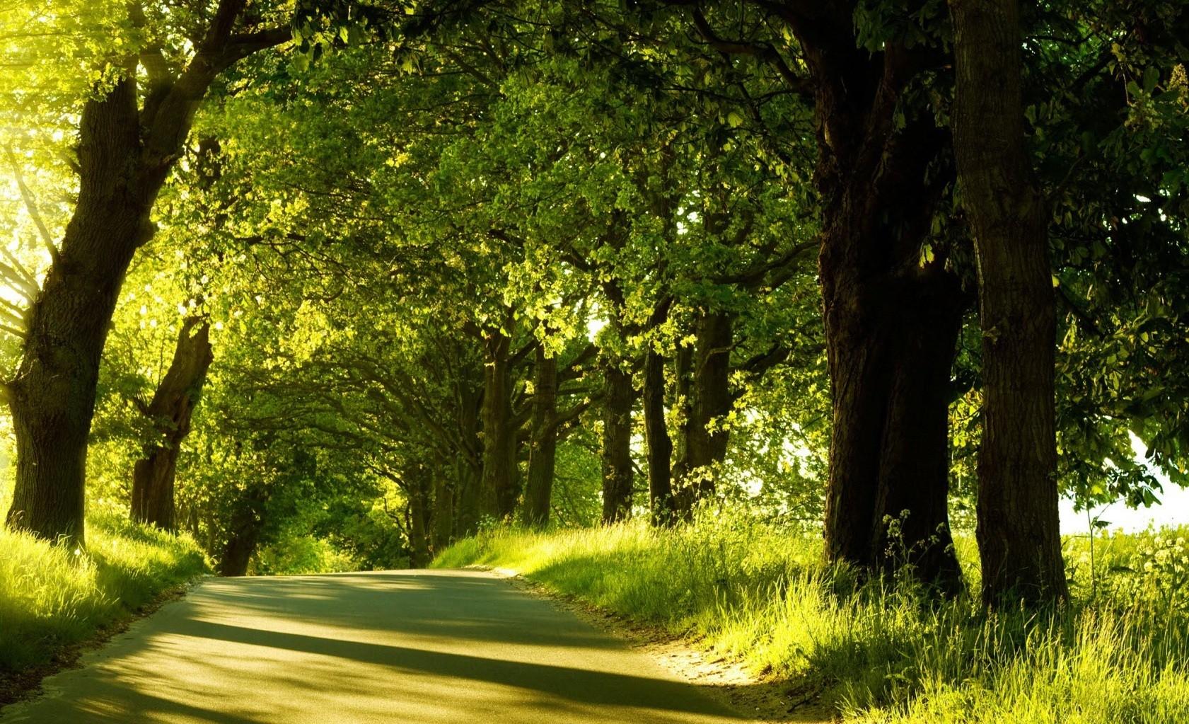 Wallpaper sunlight trees landscape forest nature