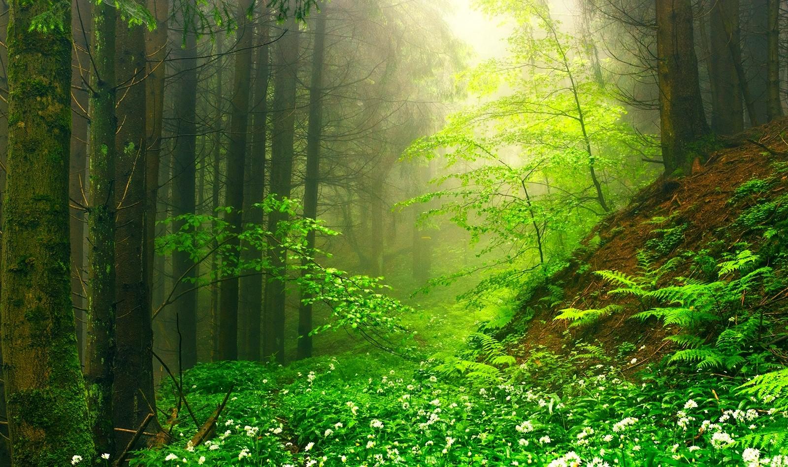 Wallpaper Sunlight Trees Landscape Nature Moss