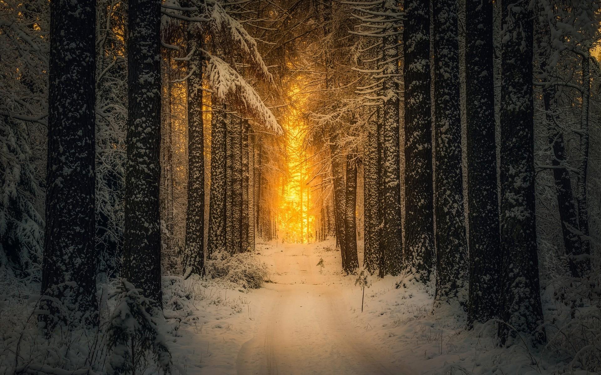 sunlight-trees-landscape-forest-nature-reflection-snow-winter-morning-path-Finland-Freezing-light-tree-weather-season-darkness-atmospheric-phenomenon-91548.jpg