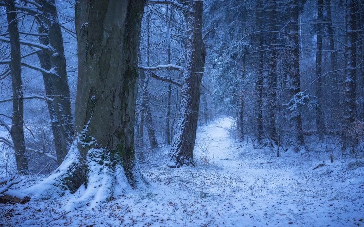 Картинки фон зимнего леса