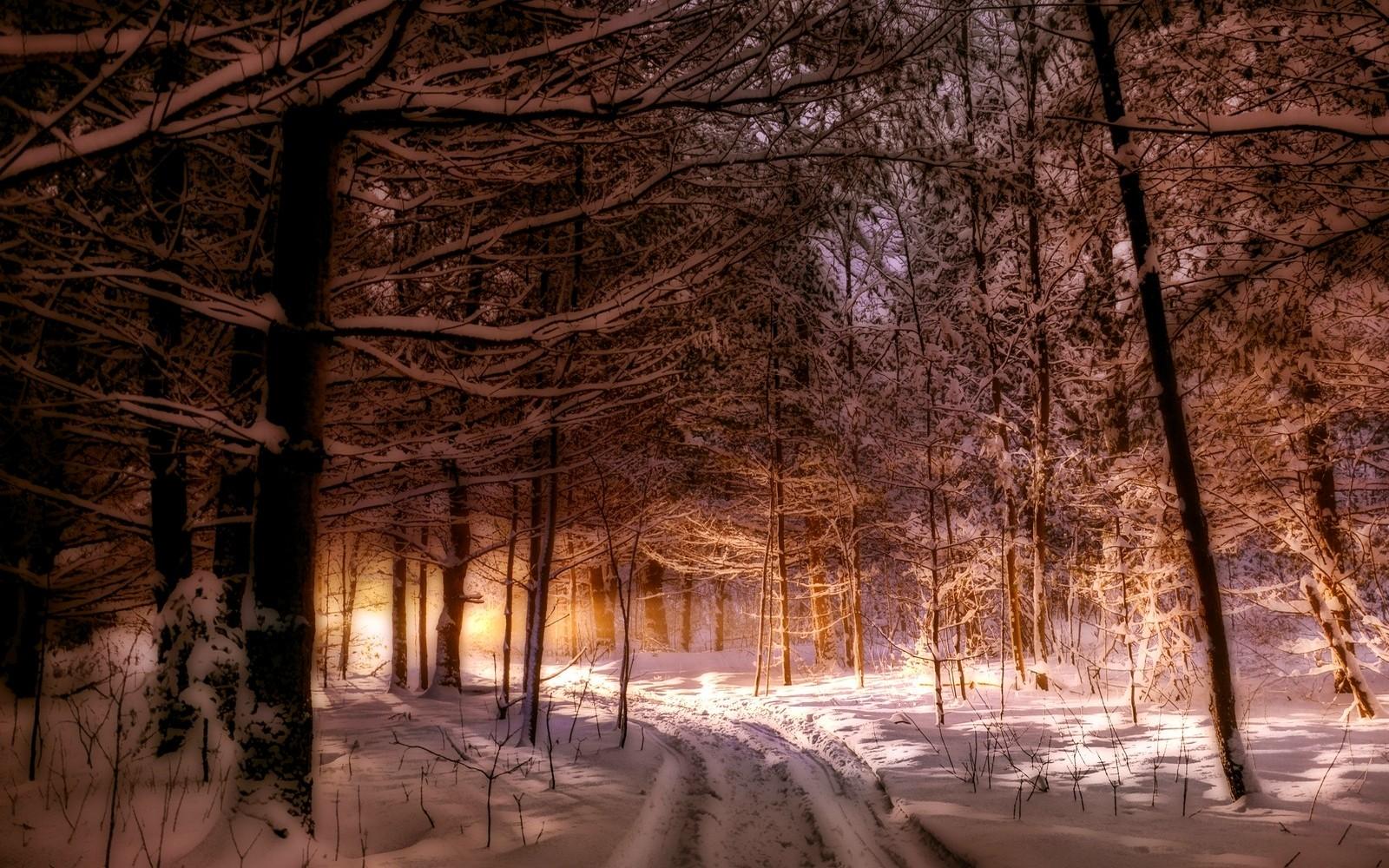 свеча зимний вечер лес фото недорого снять аренду