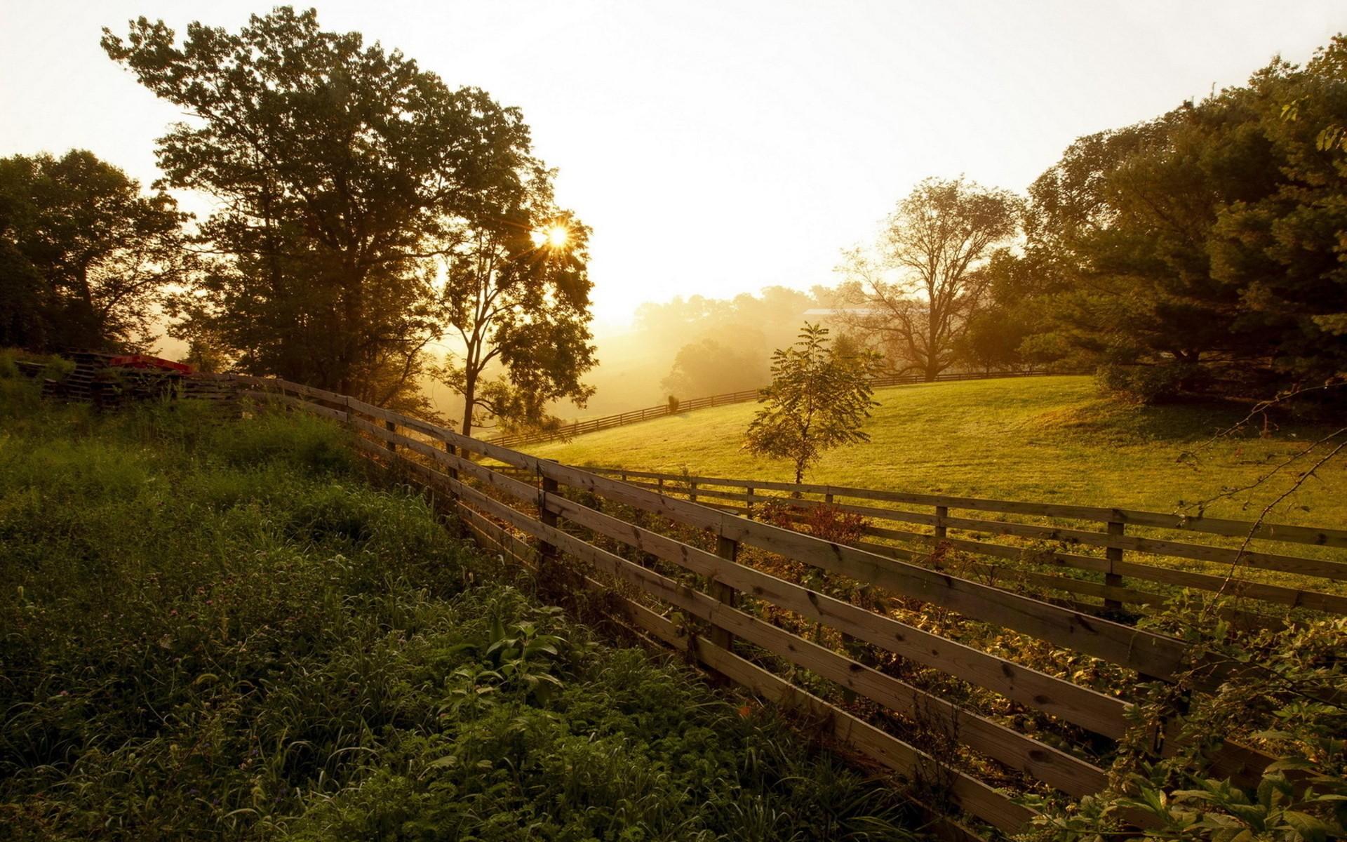 hintergrundbilder sonnenlicht b ume landschaft wald sonnenuntergang h gel natur gras. Black Bedroom Furniture Sets. Home Design Ideas