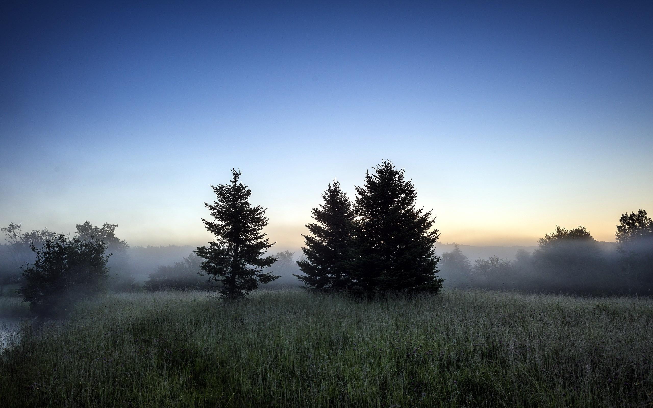 Обои восход, ёлки, утро. Природа foto 9