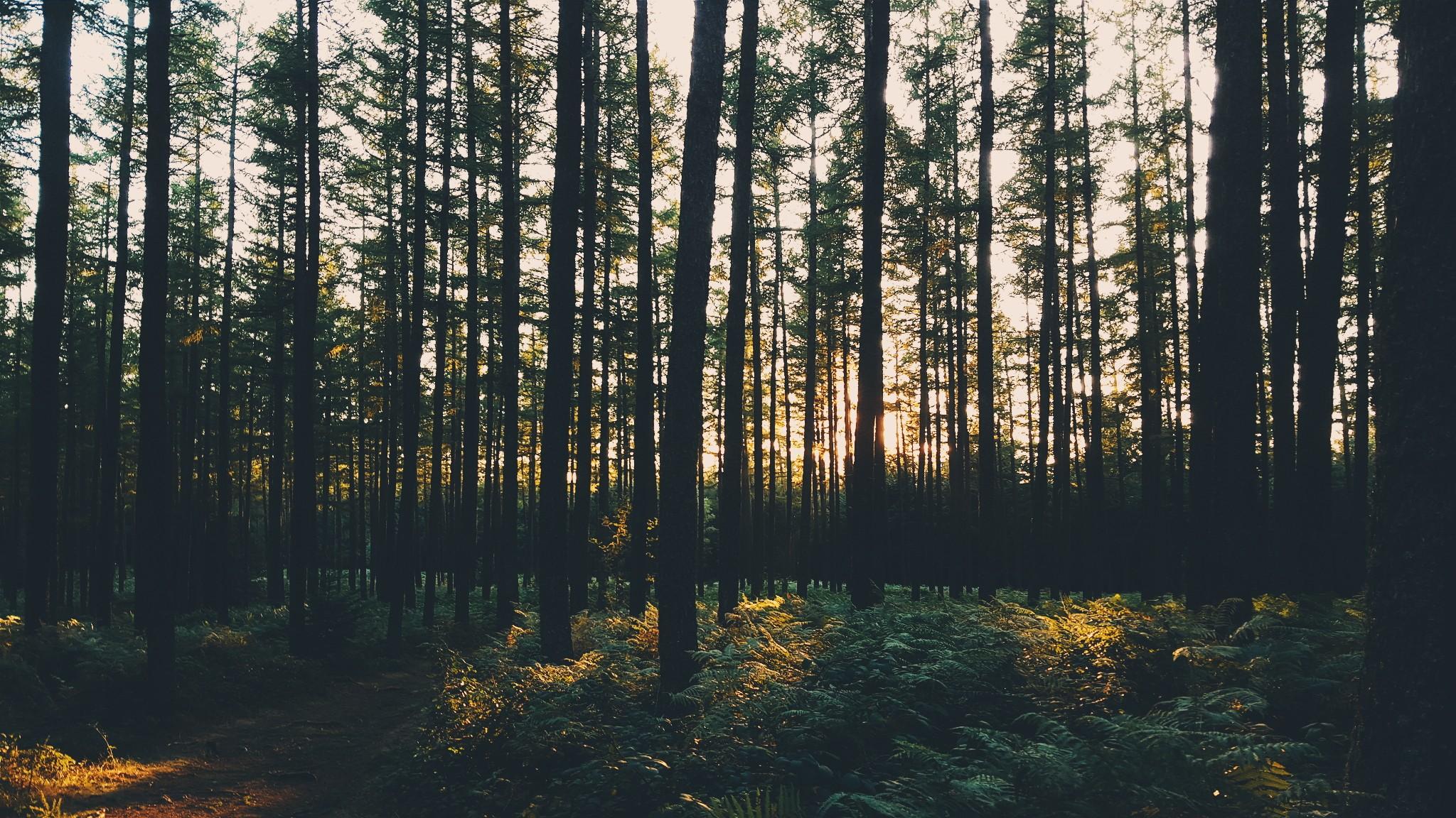 Fondos De Pantalla : Luz De Sol, Árboles, Paisaje, Bosque